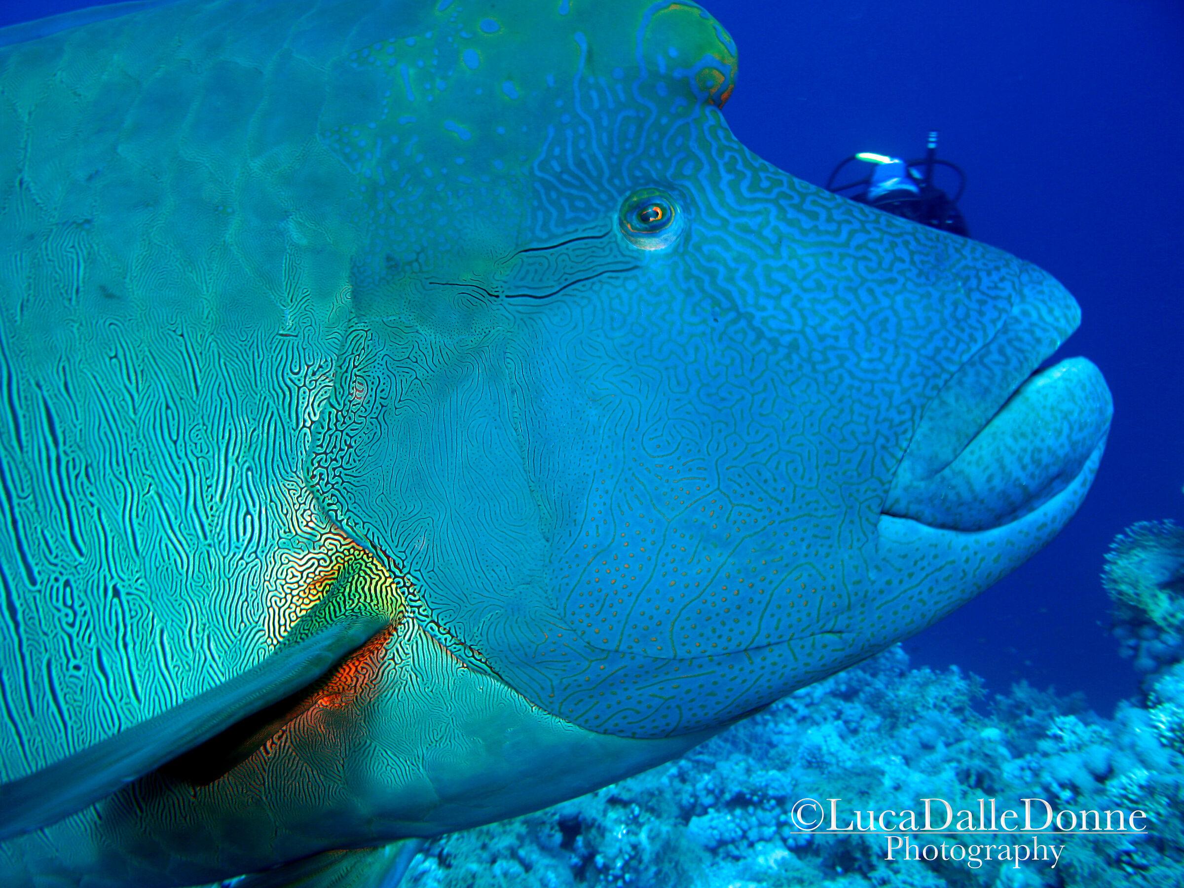 Napoleon Fish...