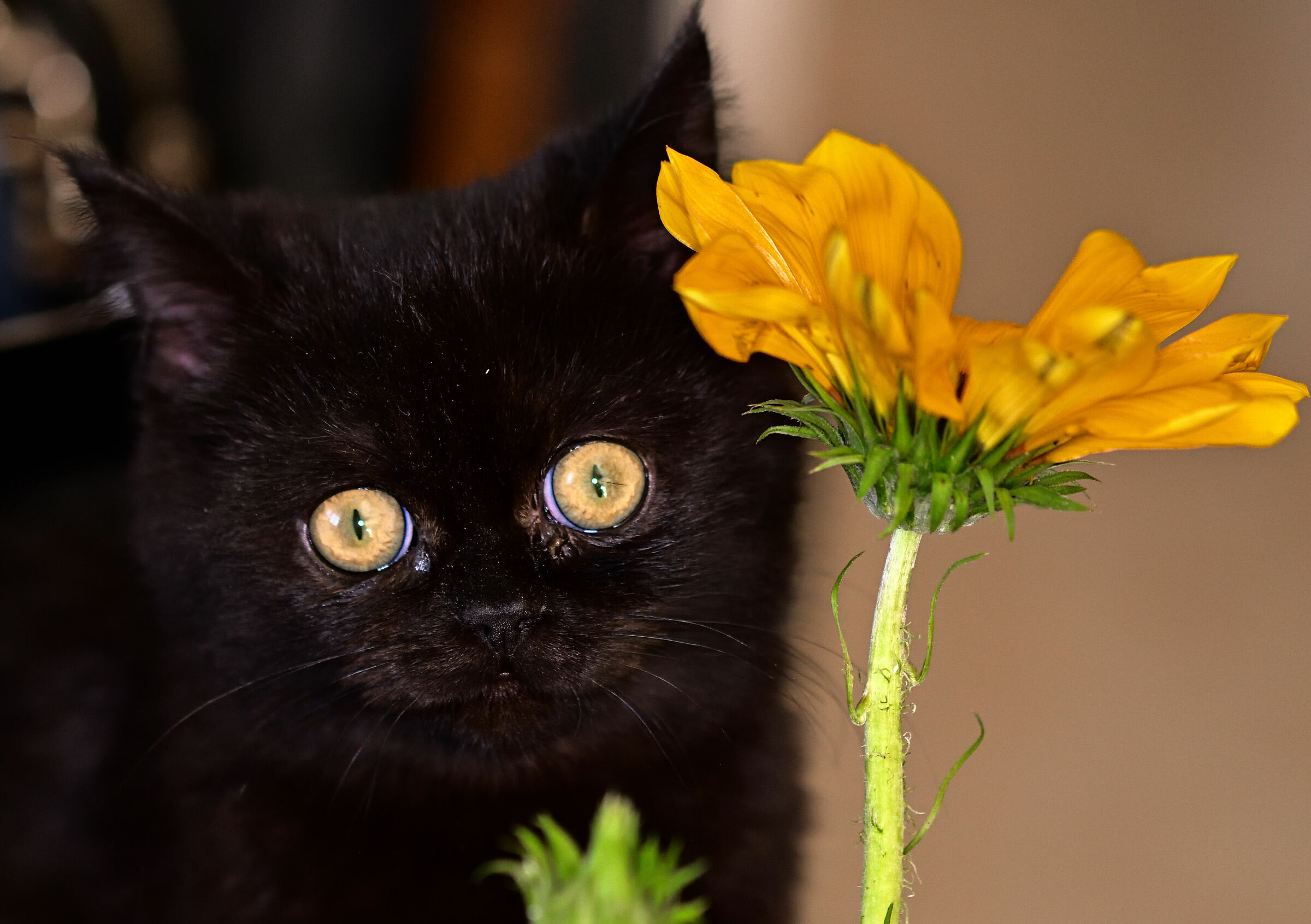 Gatto Curioso...