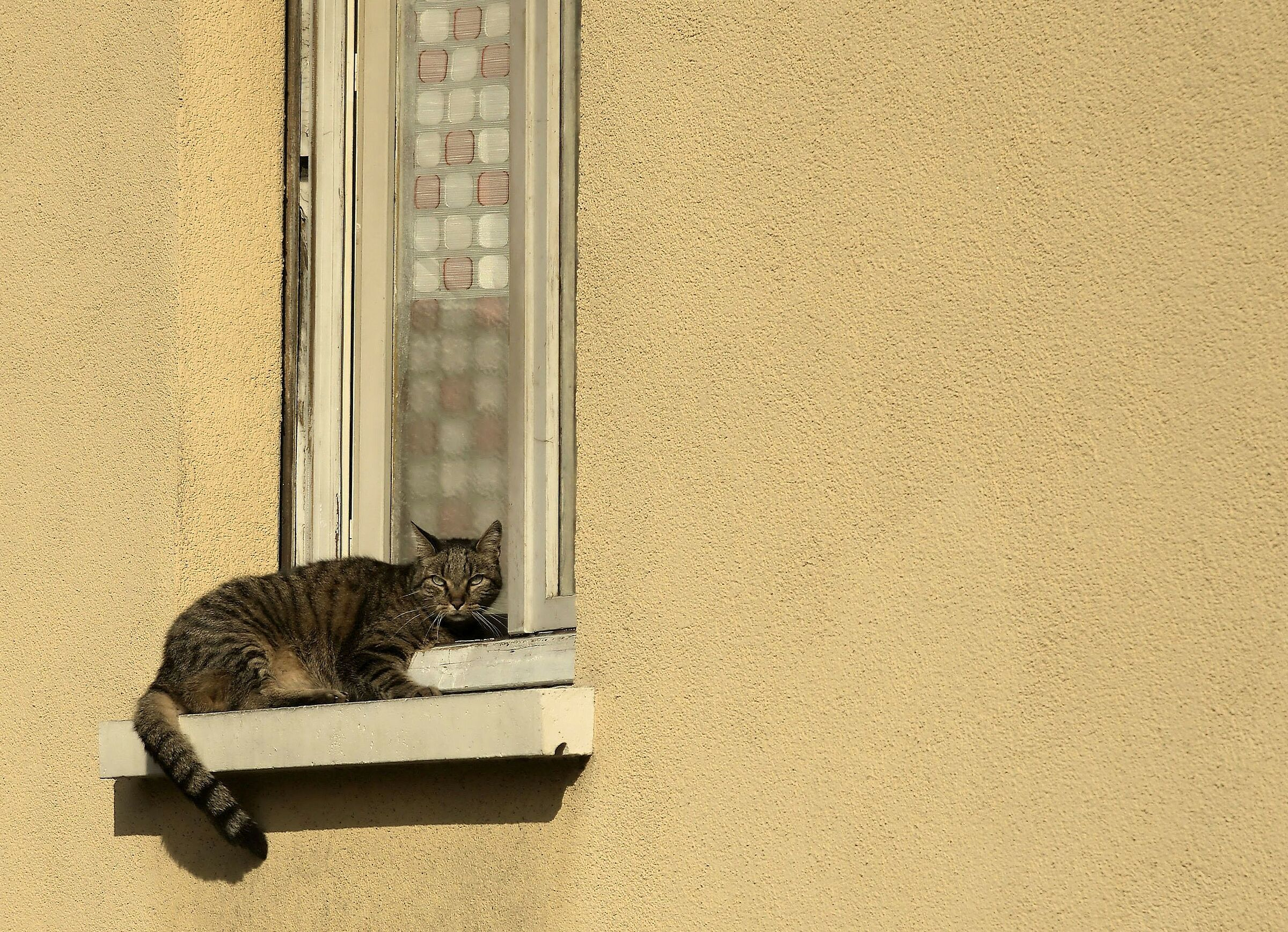 """""""Open the Windows to the new sun...""""..."""