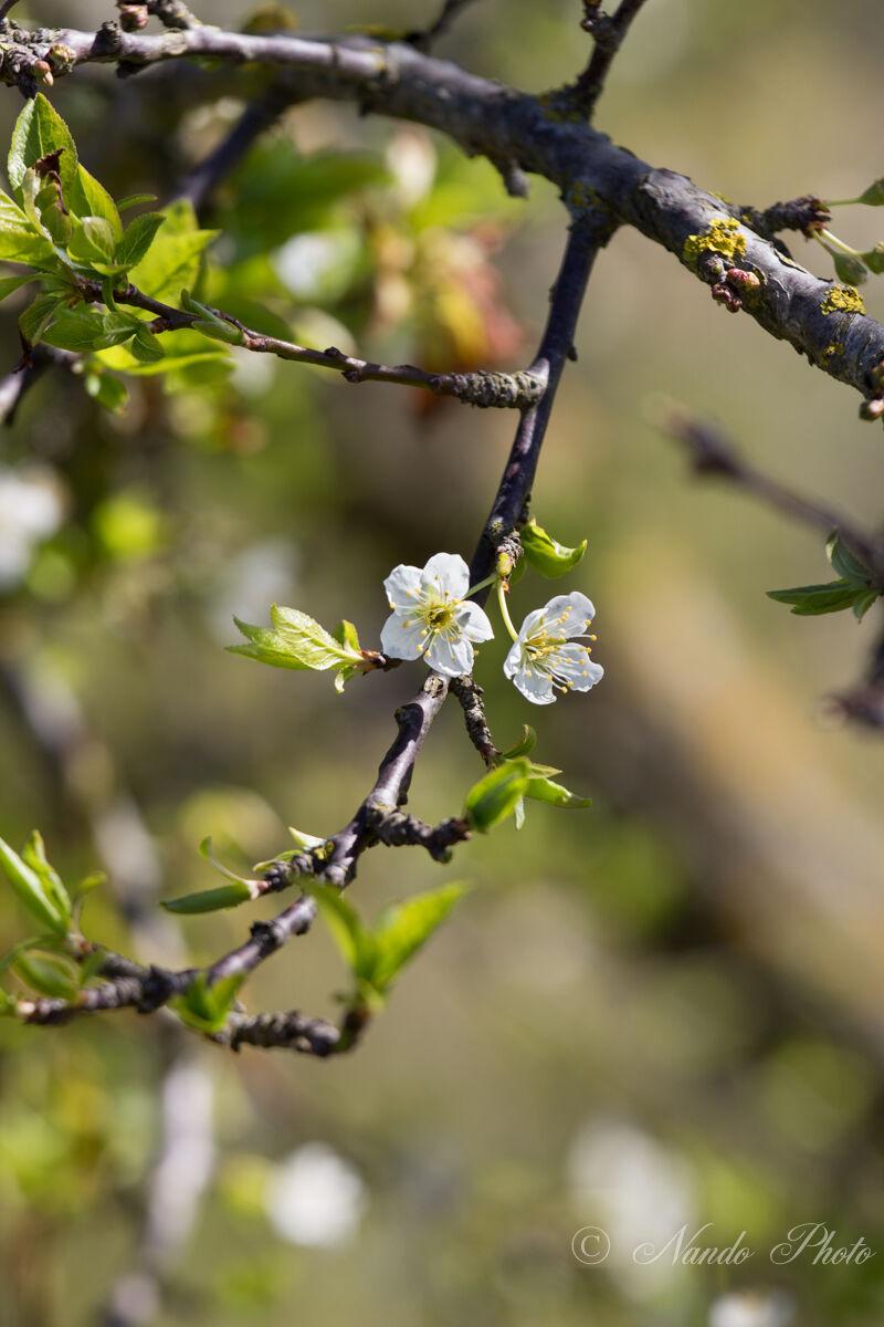 Segnali di Primavera...