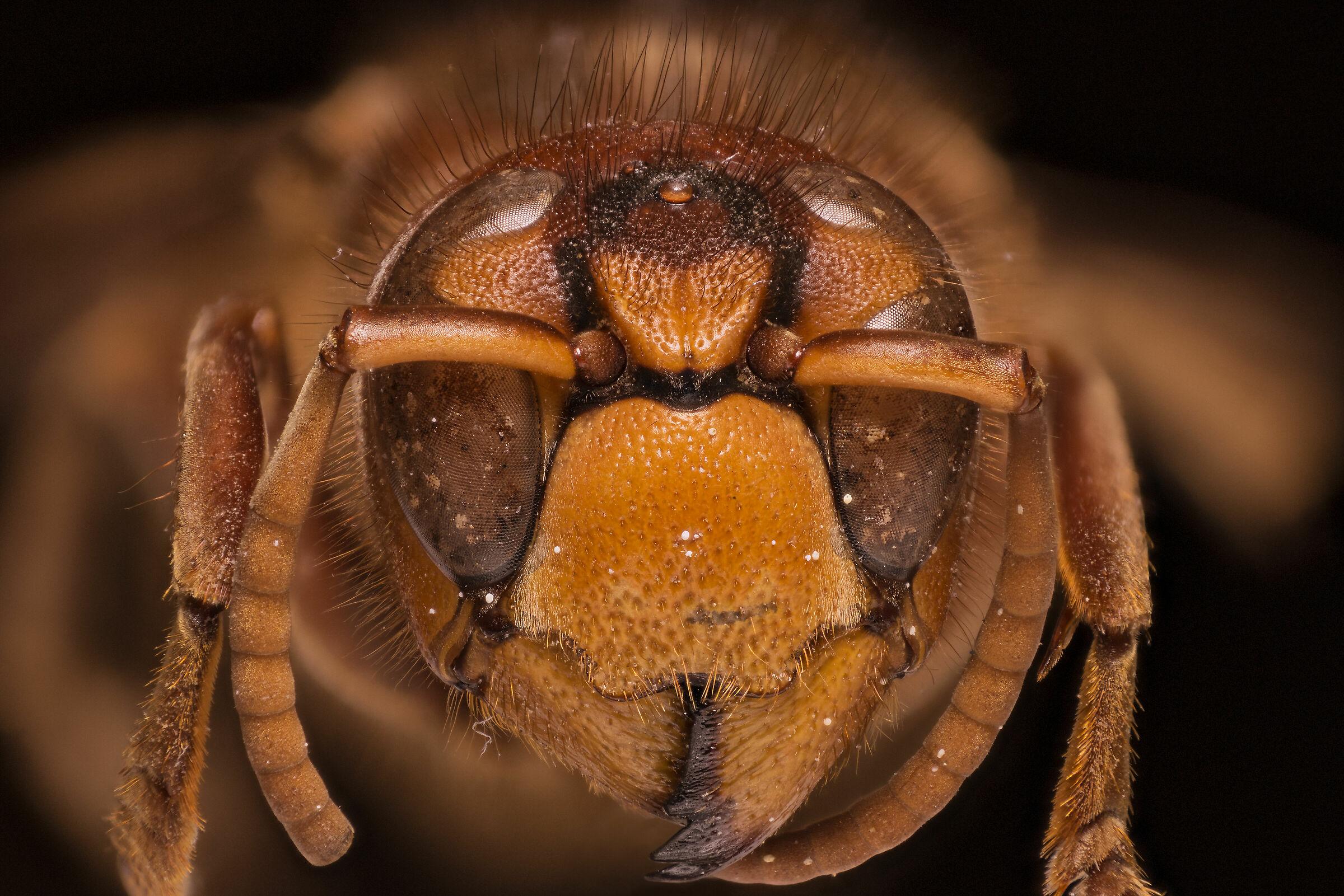 Hornet...