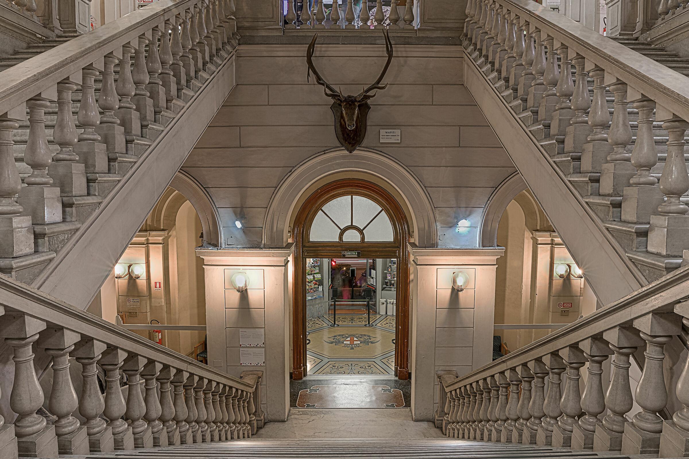 Museum of Natural History Giacomo Doria (Genoa)...