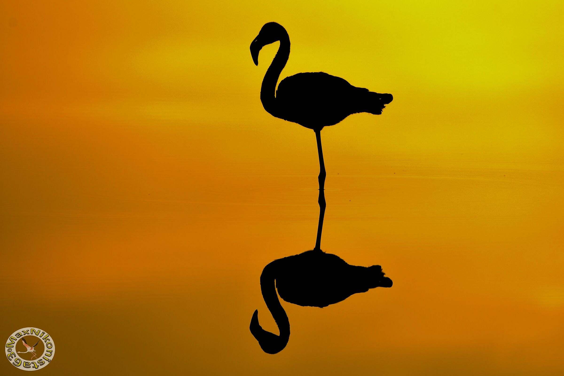Flamingo backlighting...