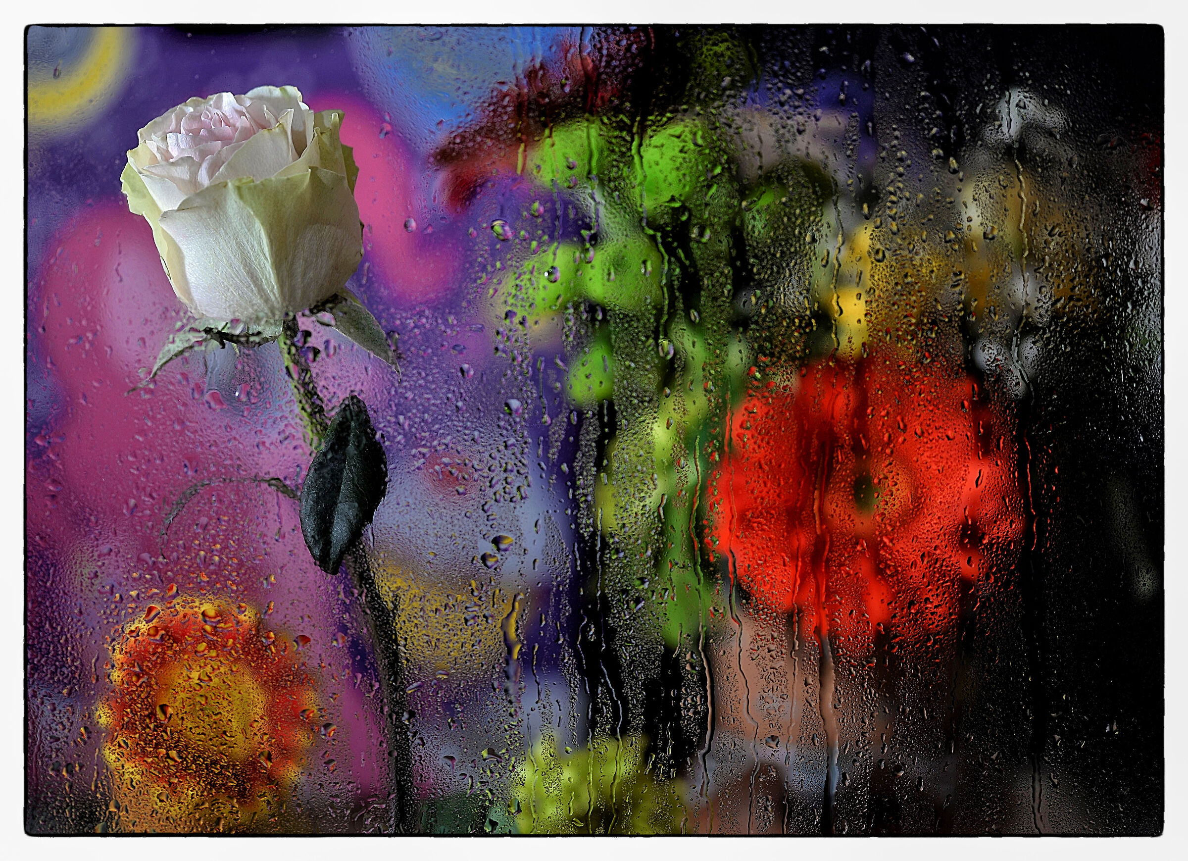 Wet Glass and flowers...