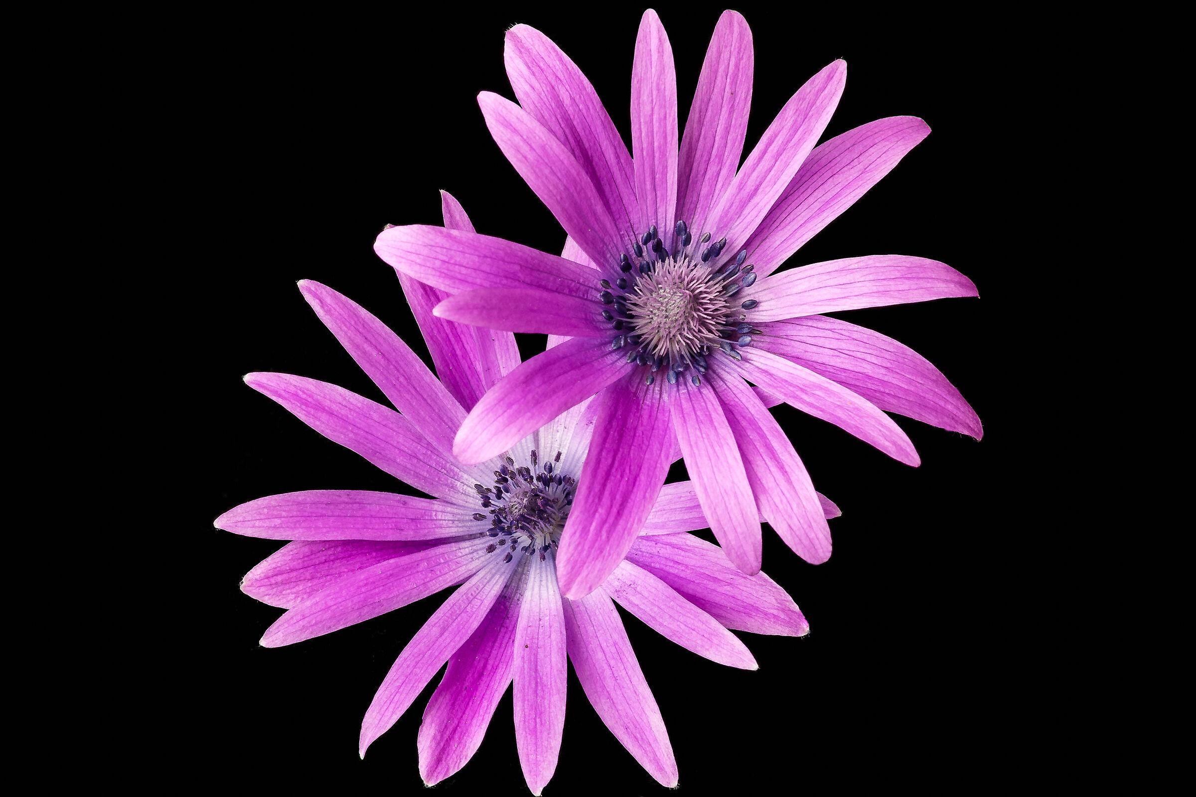 March Flower...