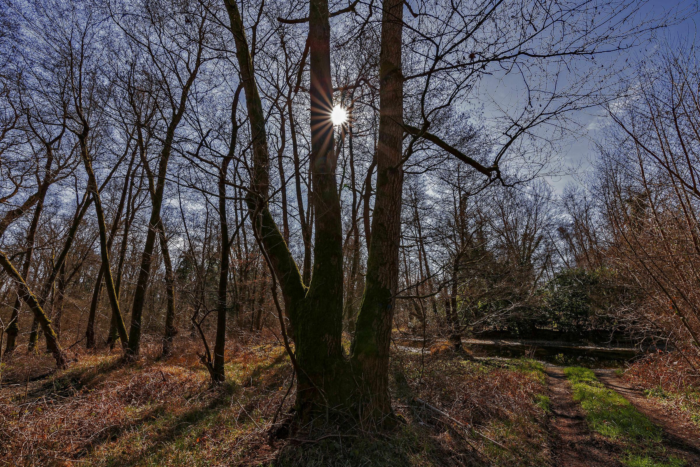 Il bosco...