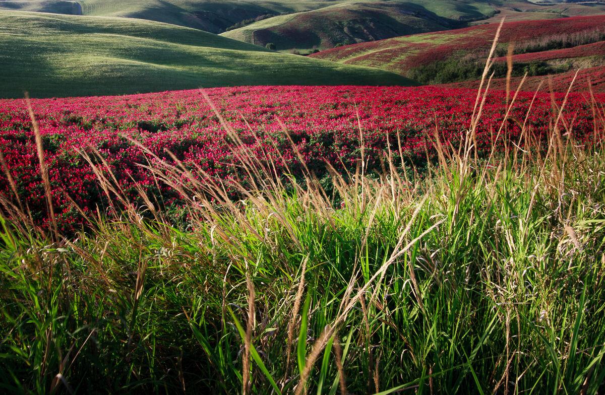 Of grass in grass......