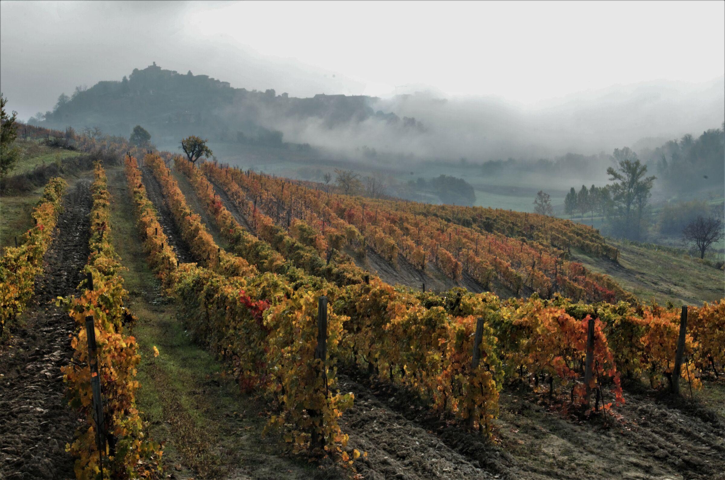 Autumn colors in Monferrato...
