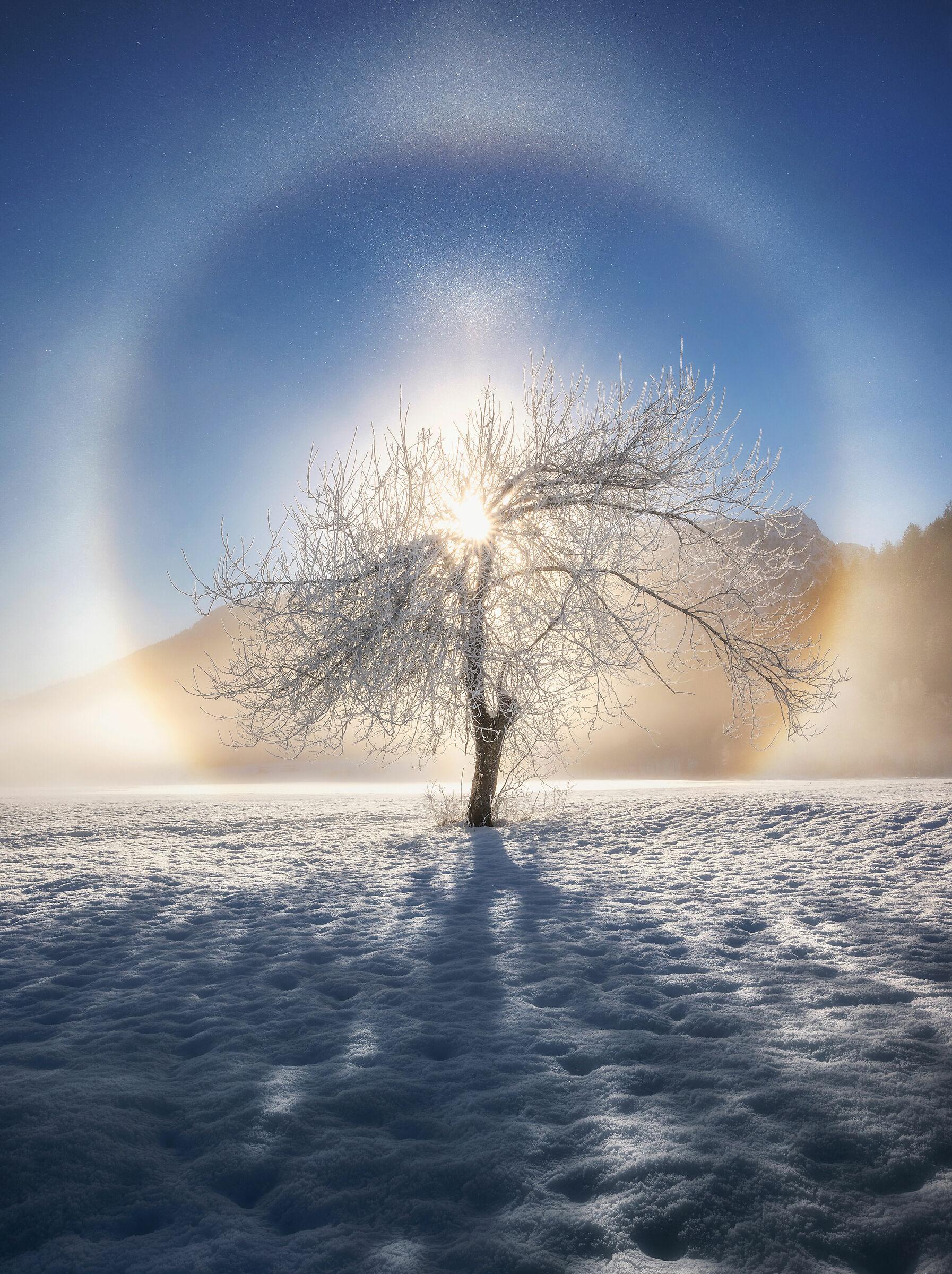 Frosty halo around the tree...