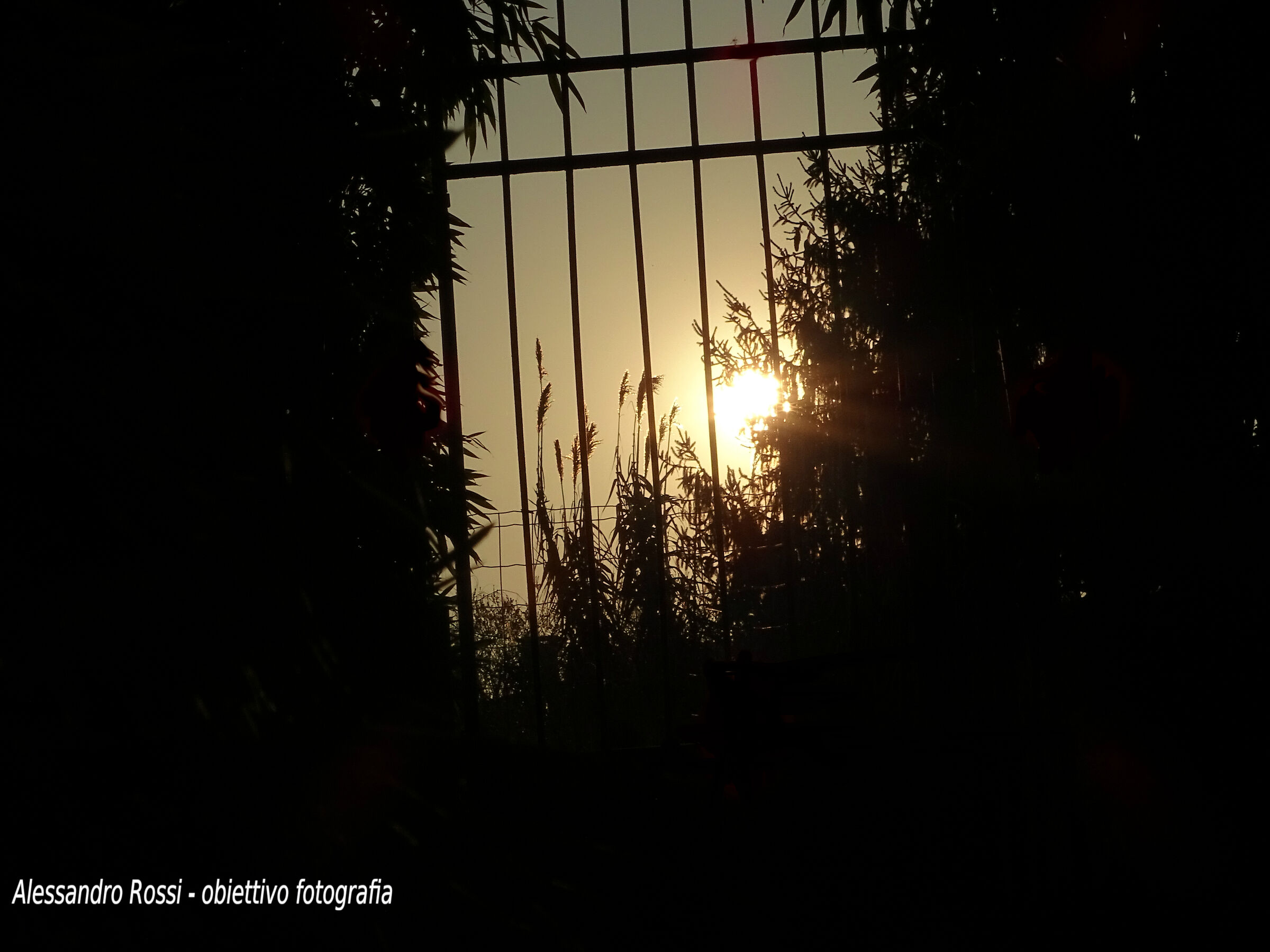 sole in gabbia...