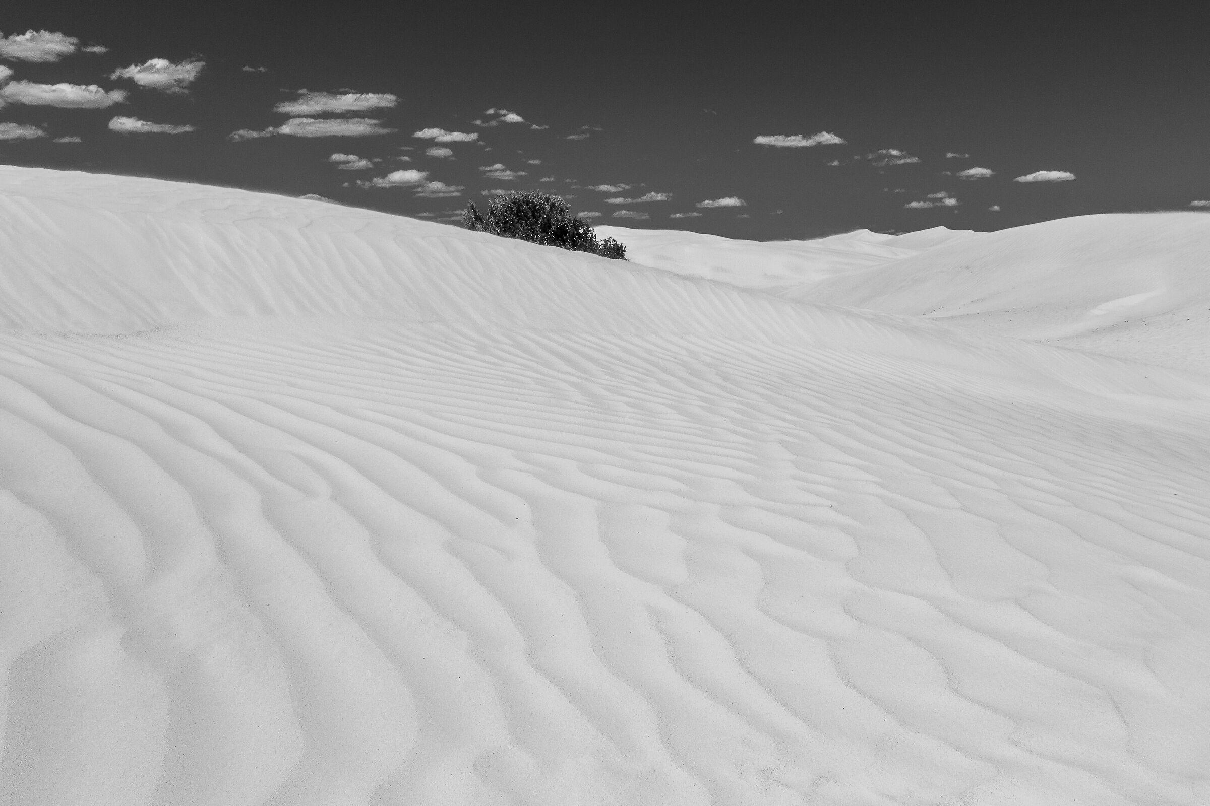 White Sand Desert...