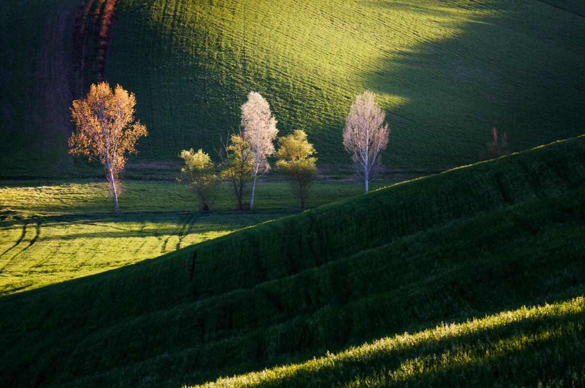 Line of trees......