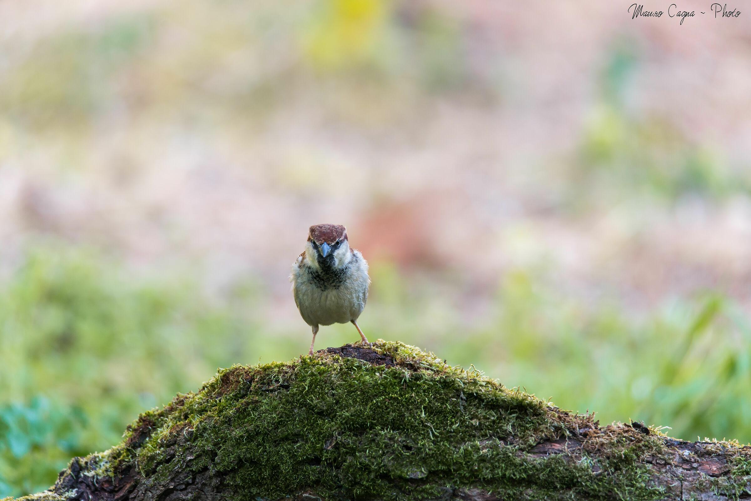 Angry bird......