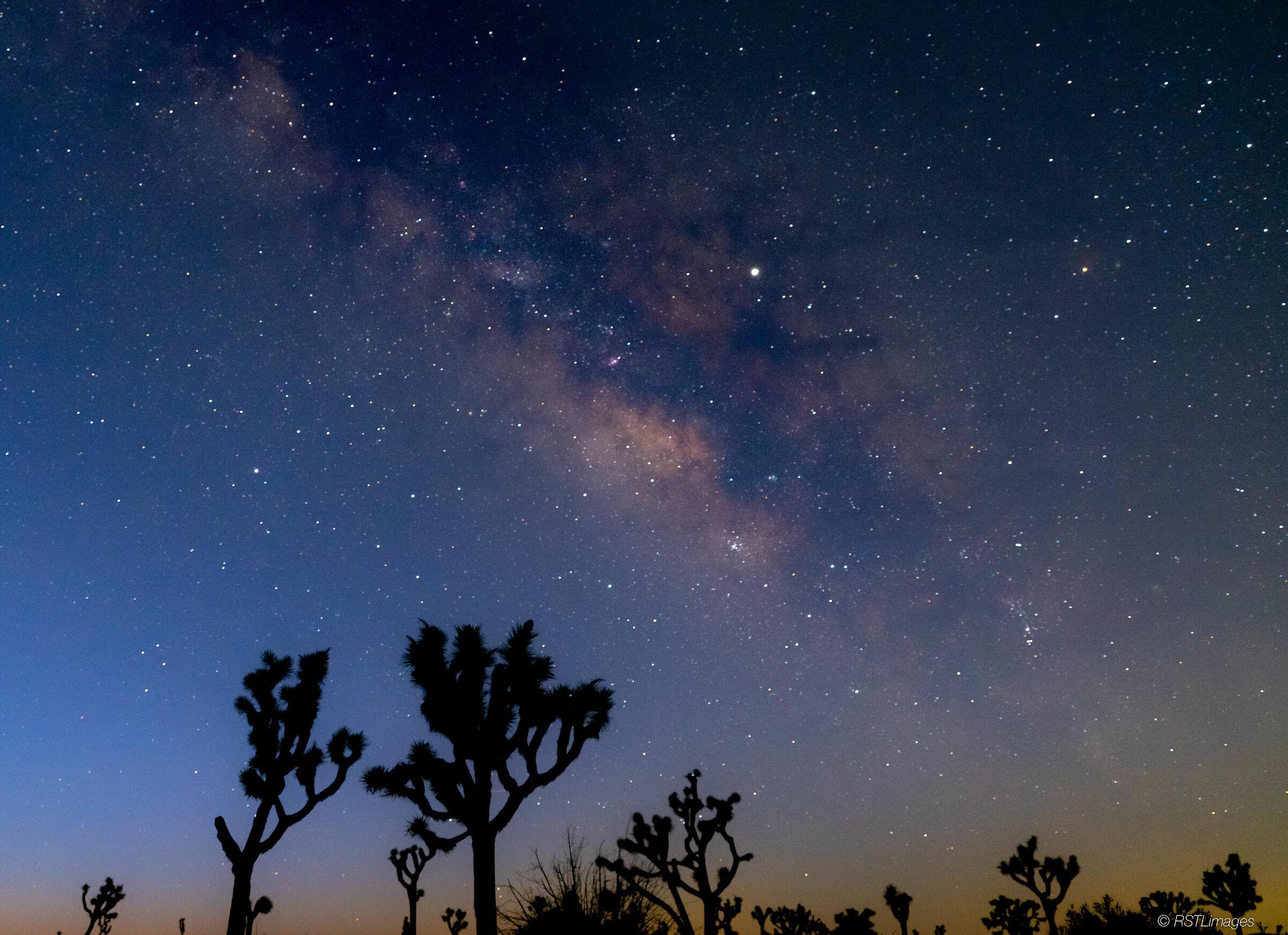 Milky Way over Joshua Tree...