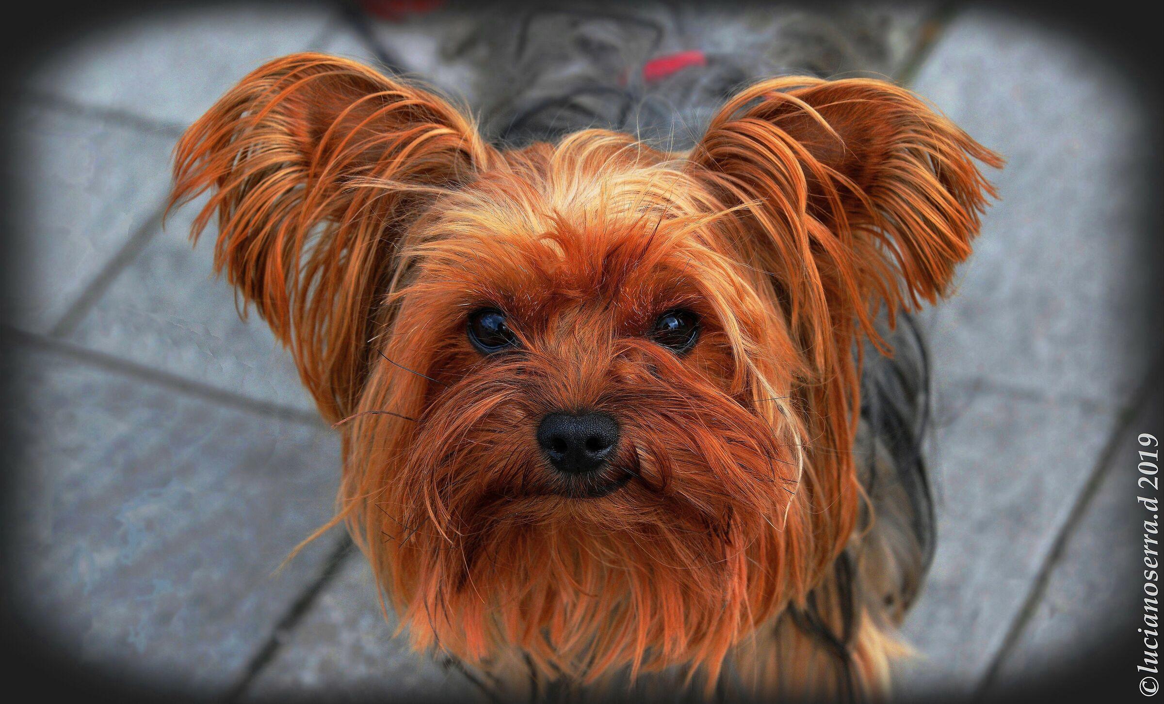 """Vi presento Jack... un """"quasi"""" cane da guardia......"""