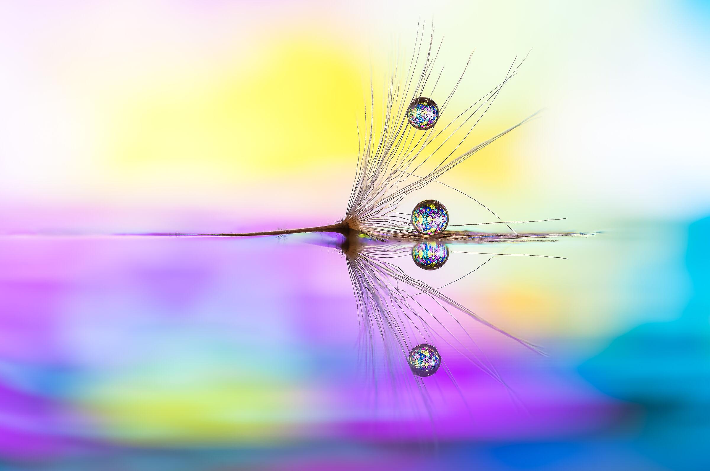 true colors Drops Flowers Gocce Fiori Riflessi...
