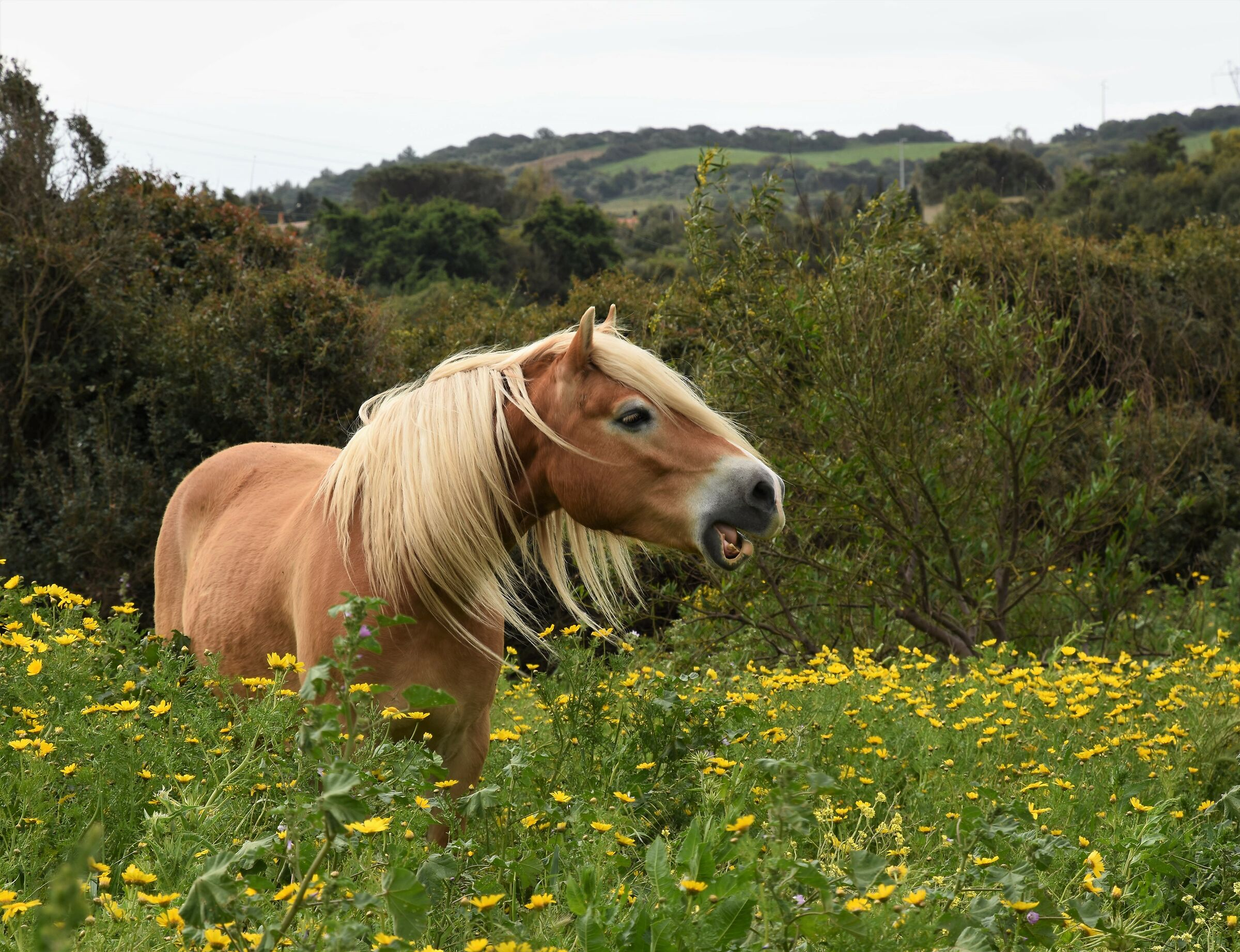 A horse in the flowers..... ...