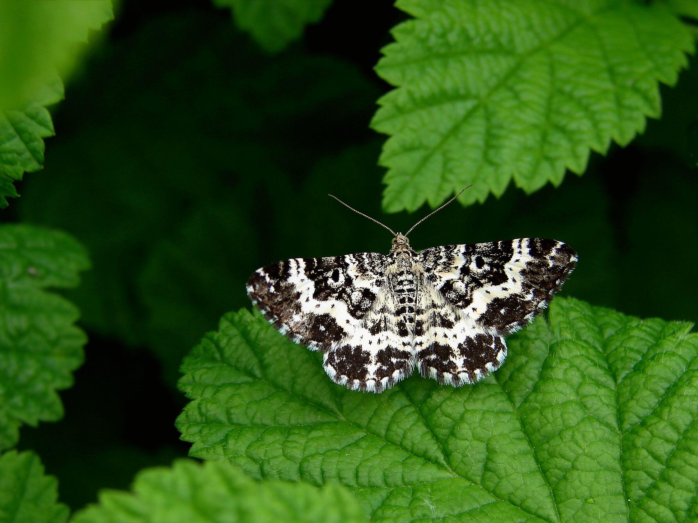 Butterfly x...