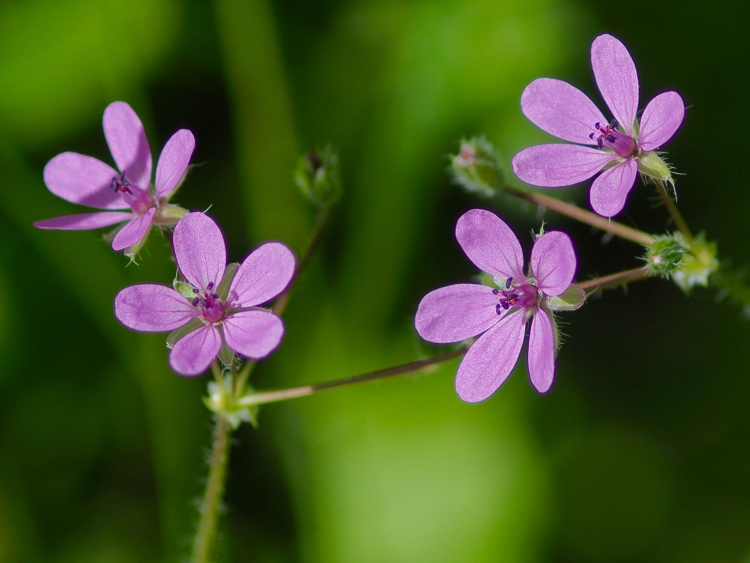 Field Flowers...