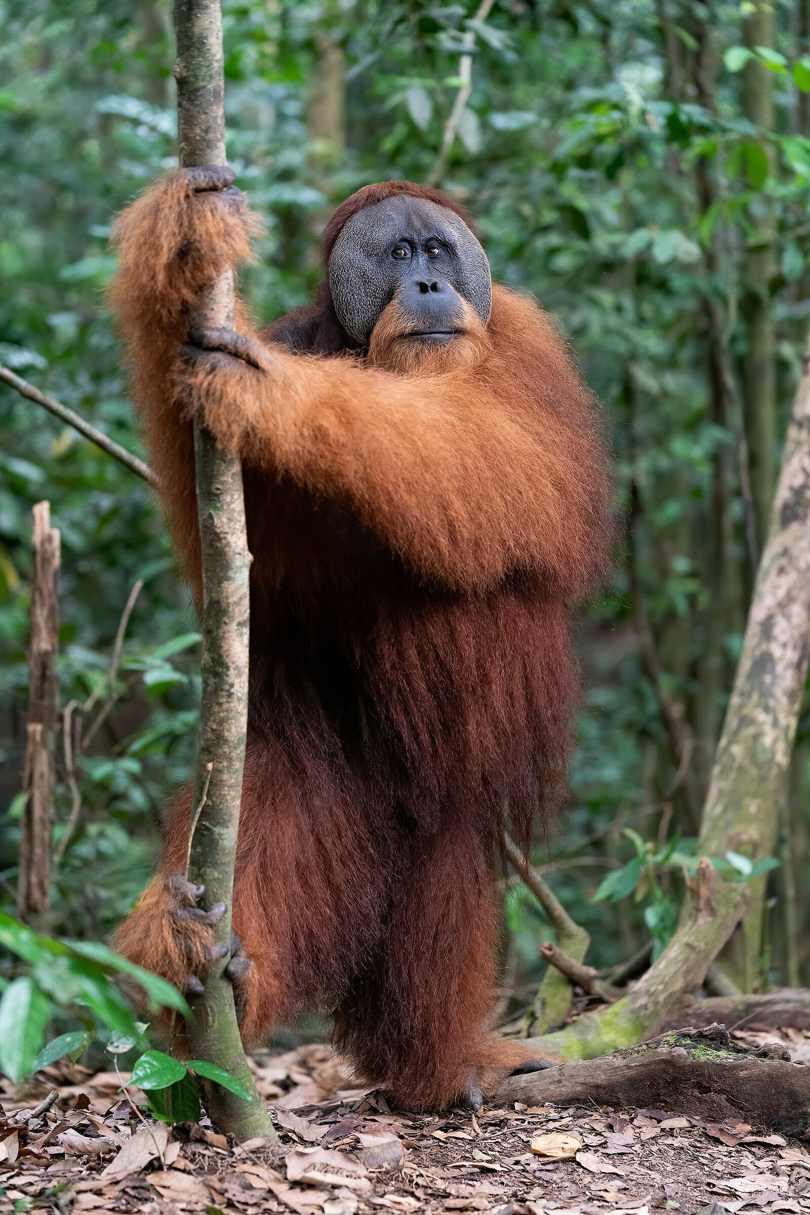 Jungle's guardian...