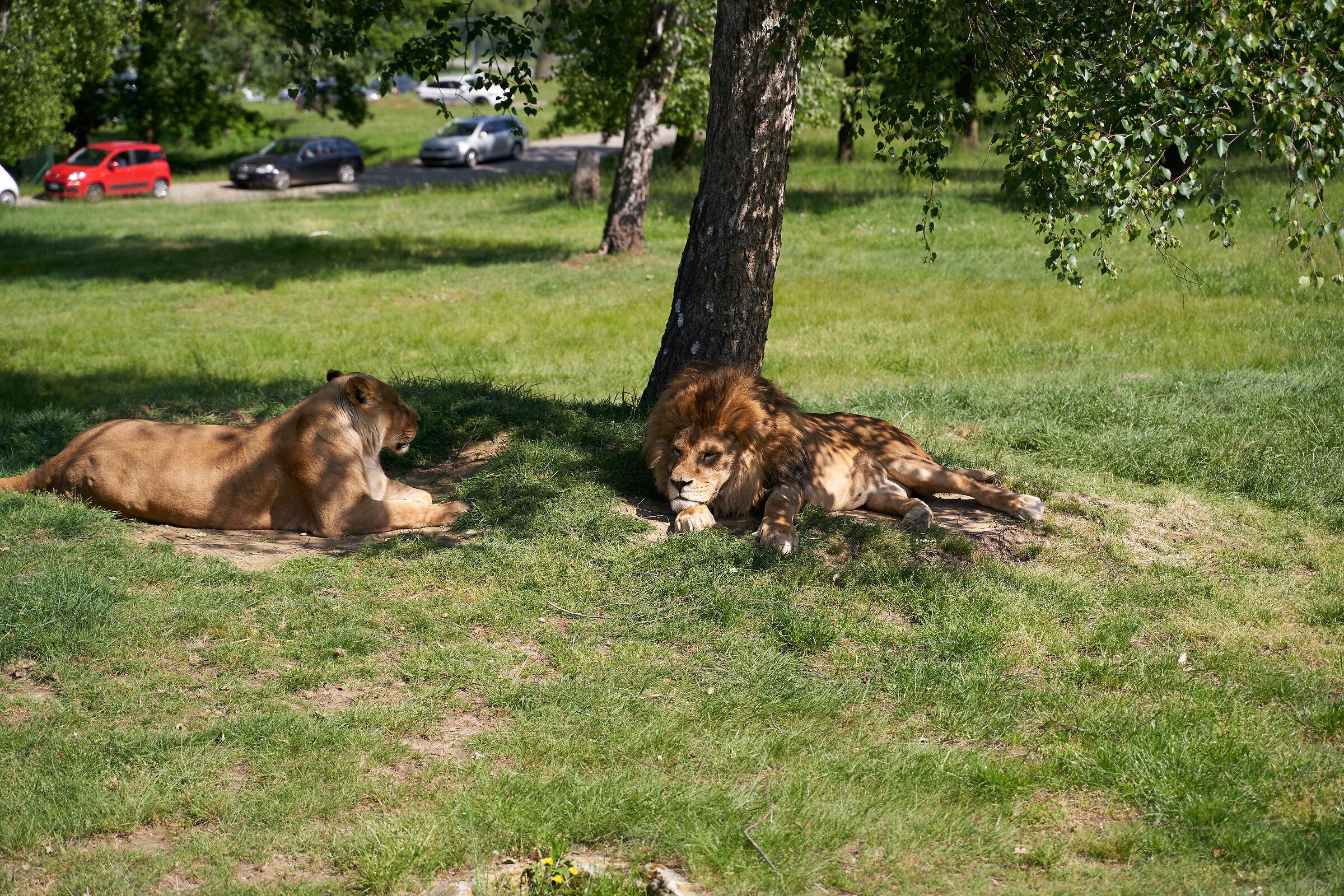 Zoo spectators...