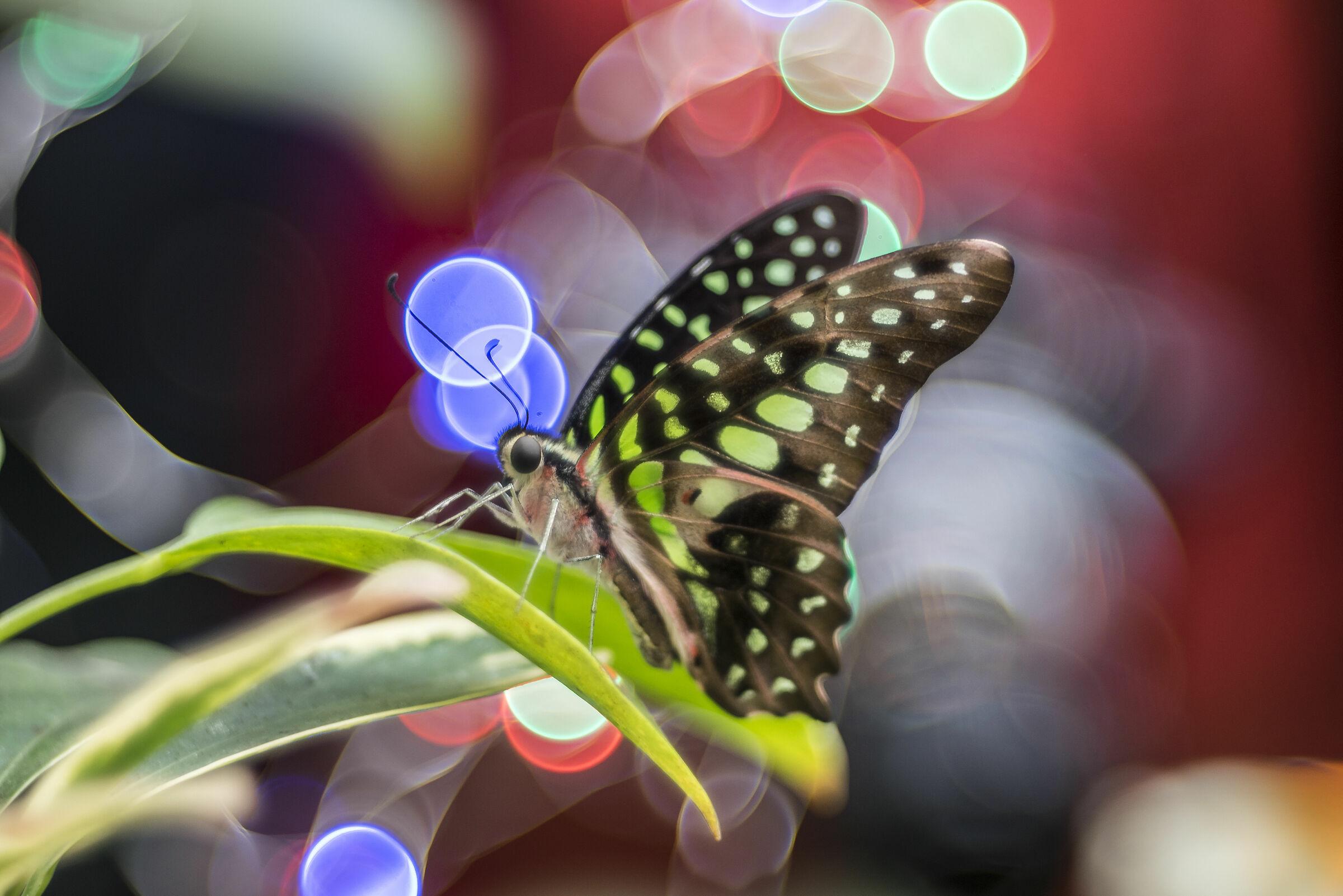 La casa delle farfalle...
