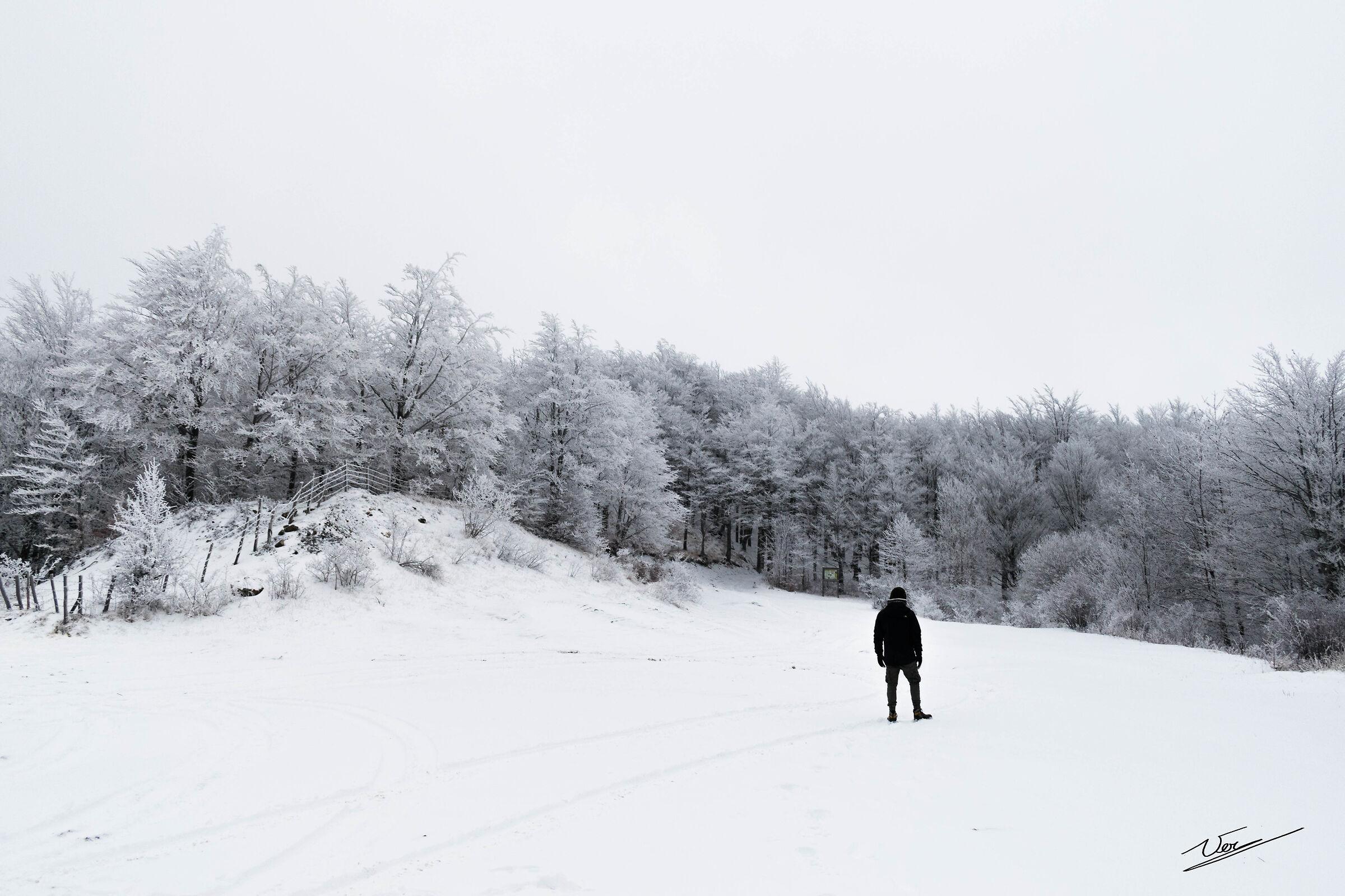 A white winter day...