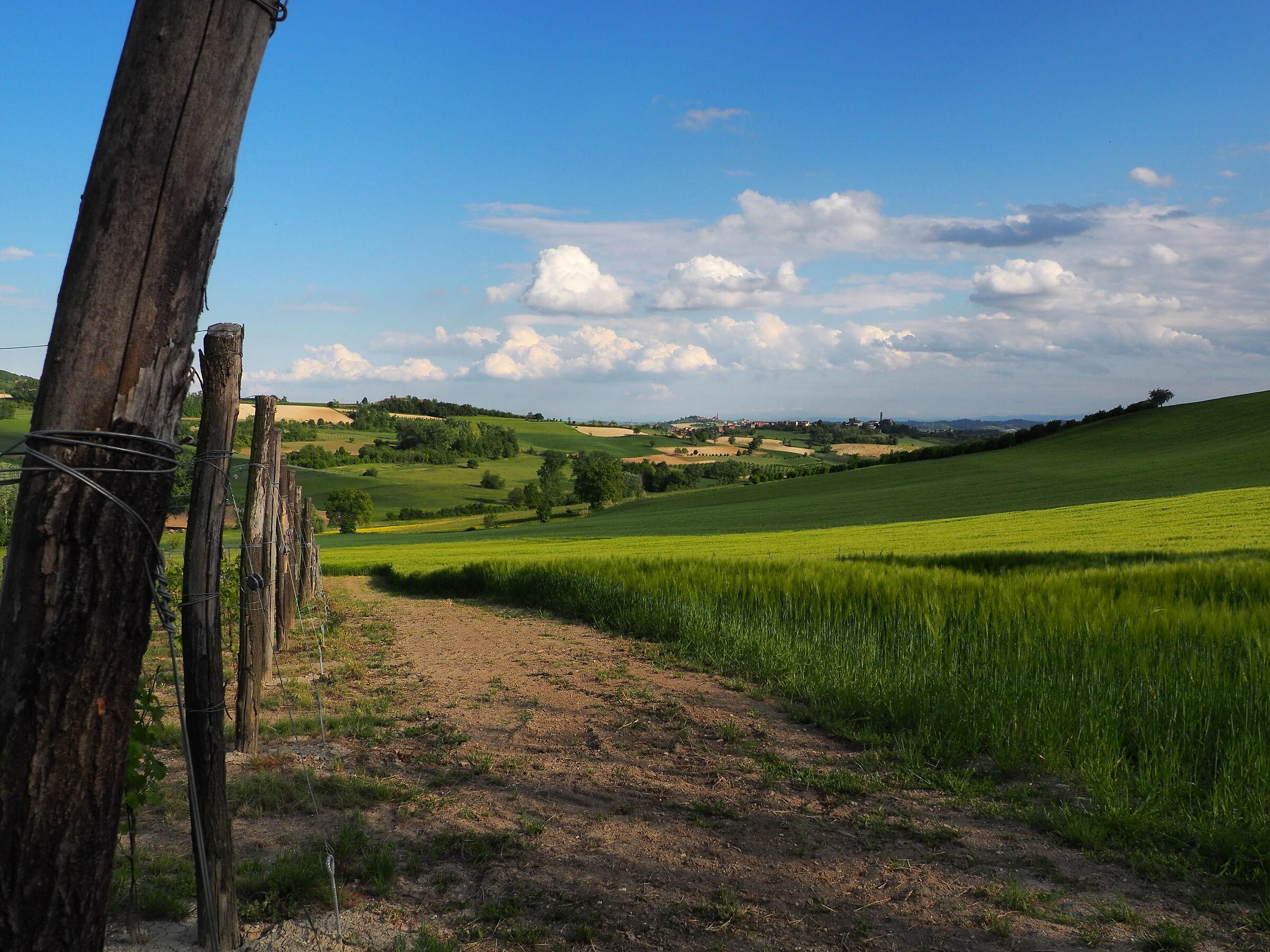 The Monferrato...