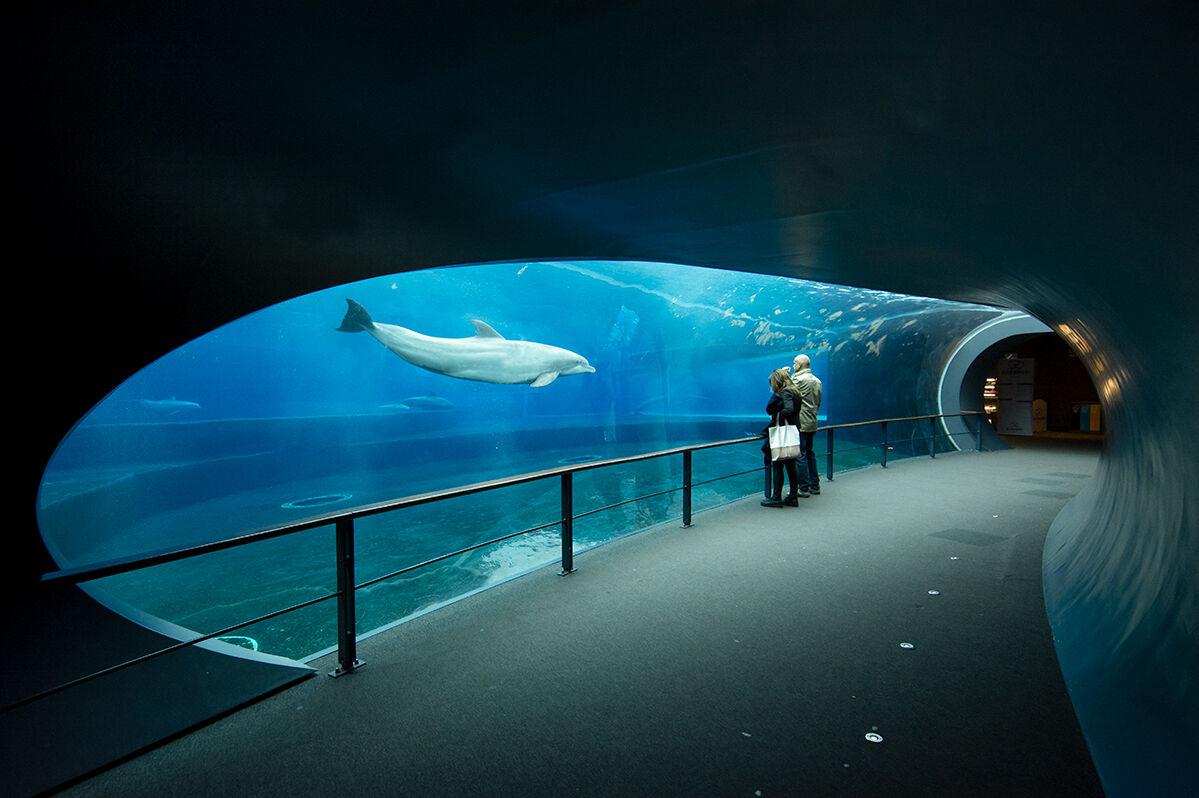 Dolphinarium...