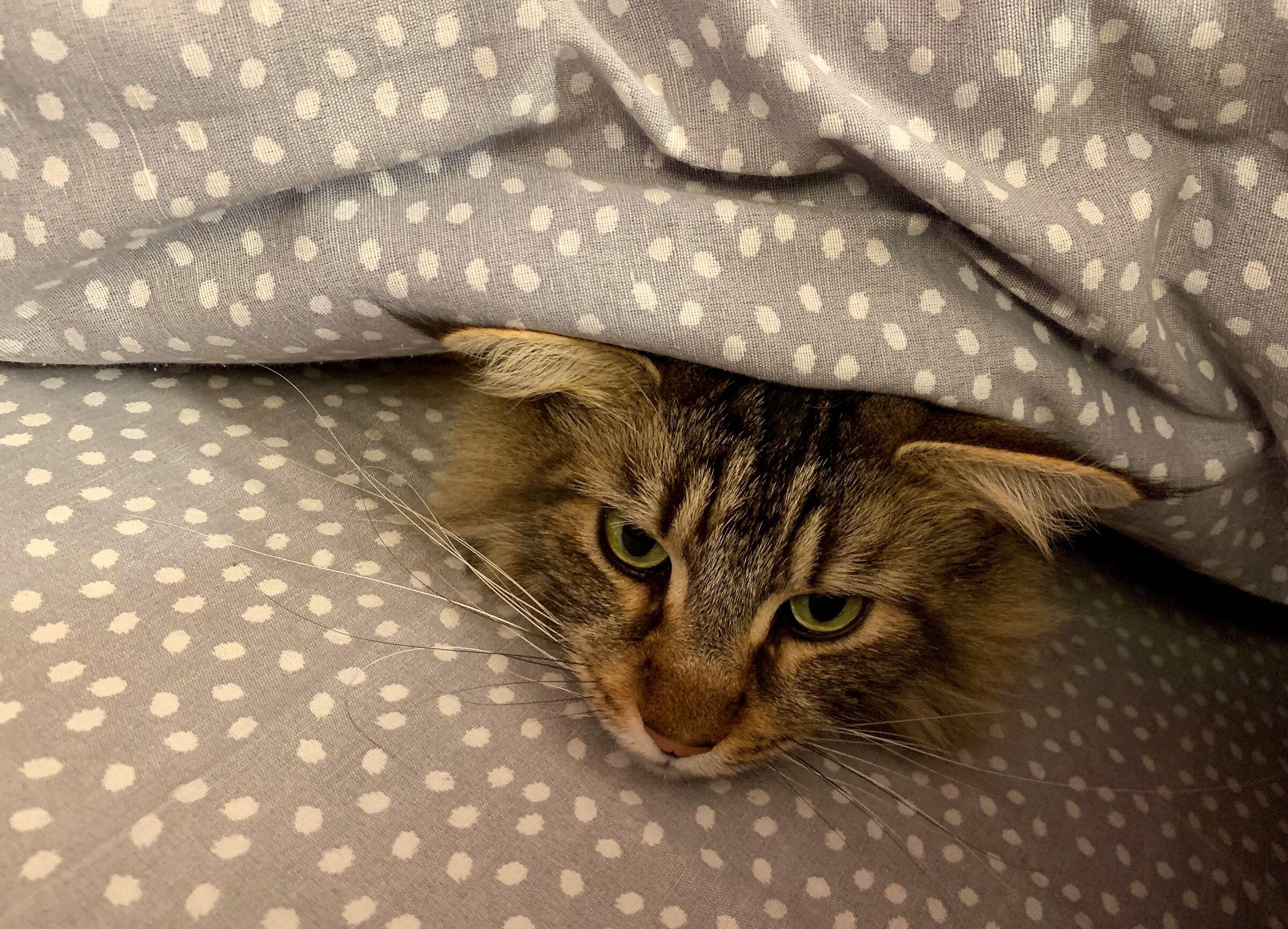 Il gatto perde il pelo ma non il vizio...