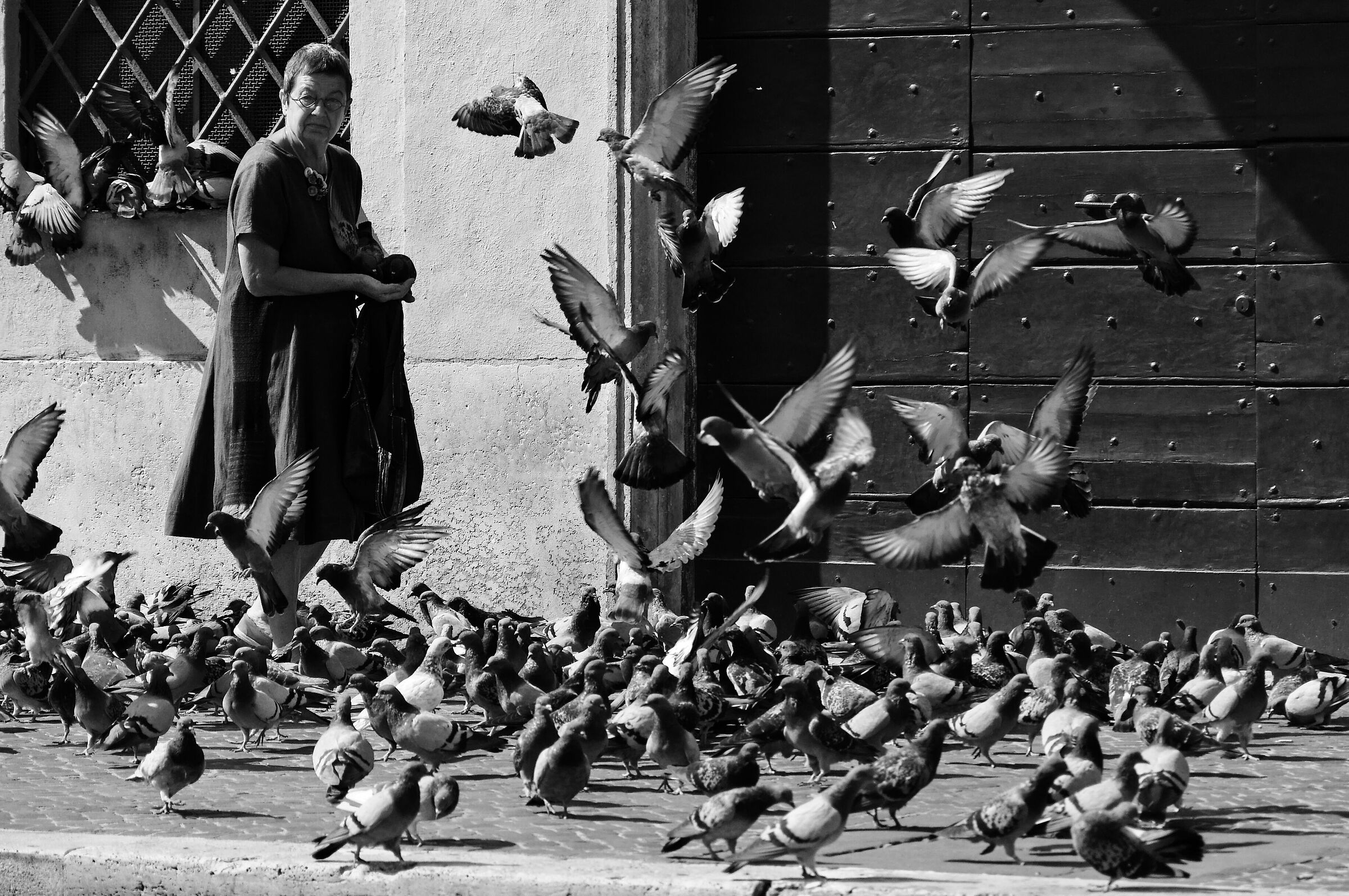 The pigeons of Rome:D...