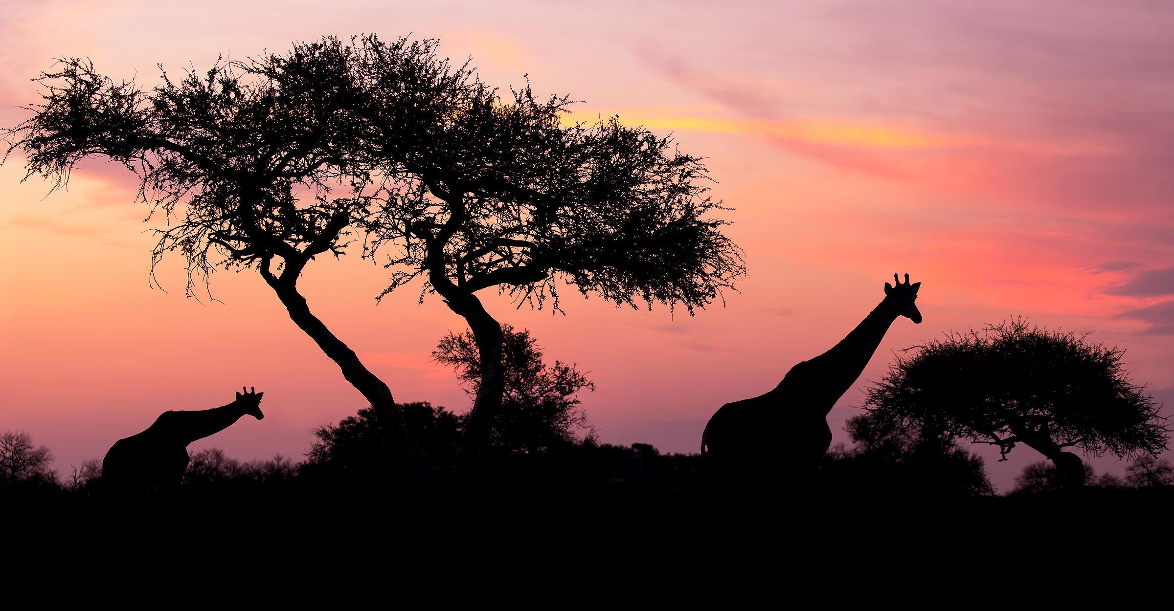 Mal of Africa...