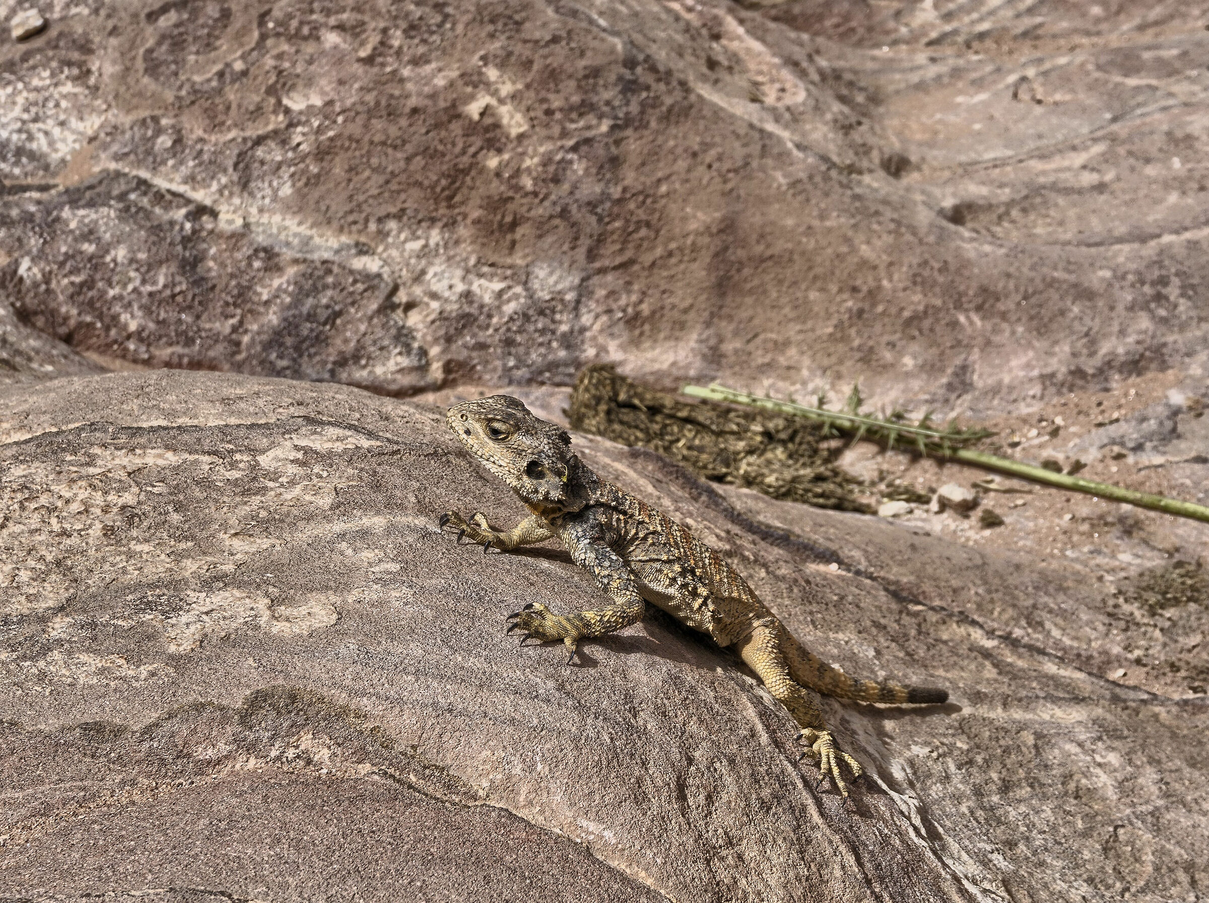 The vain reptile...