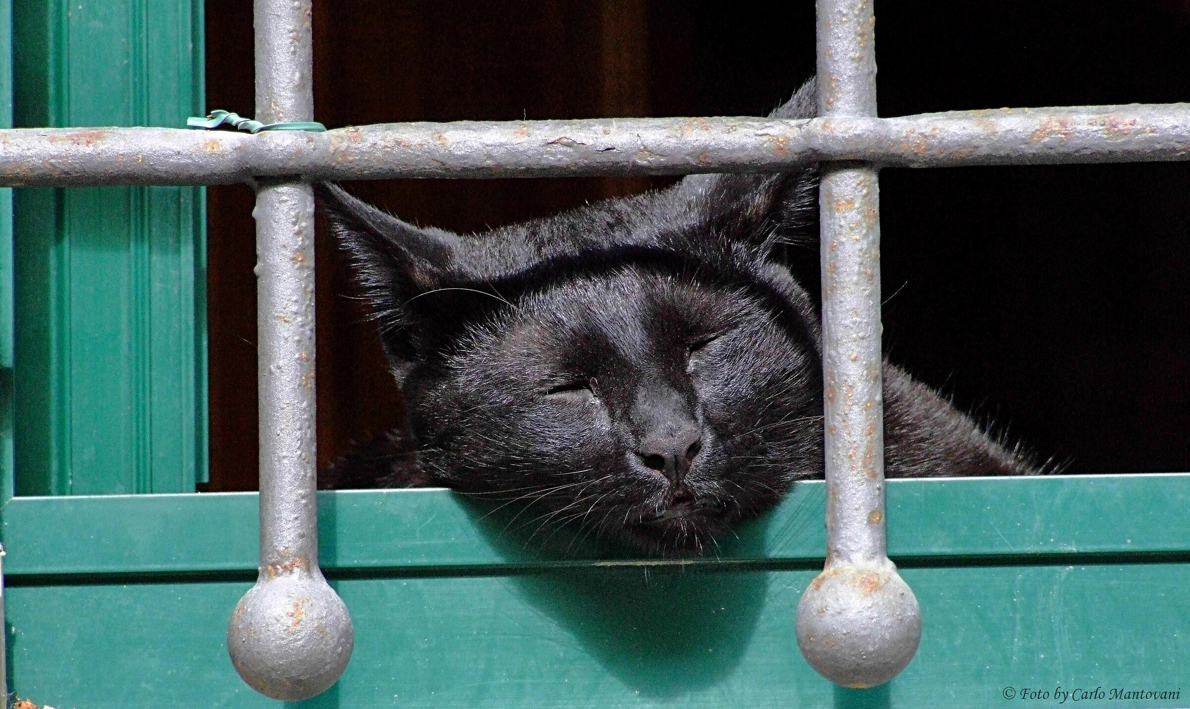 Gatto in carcere...