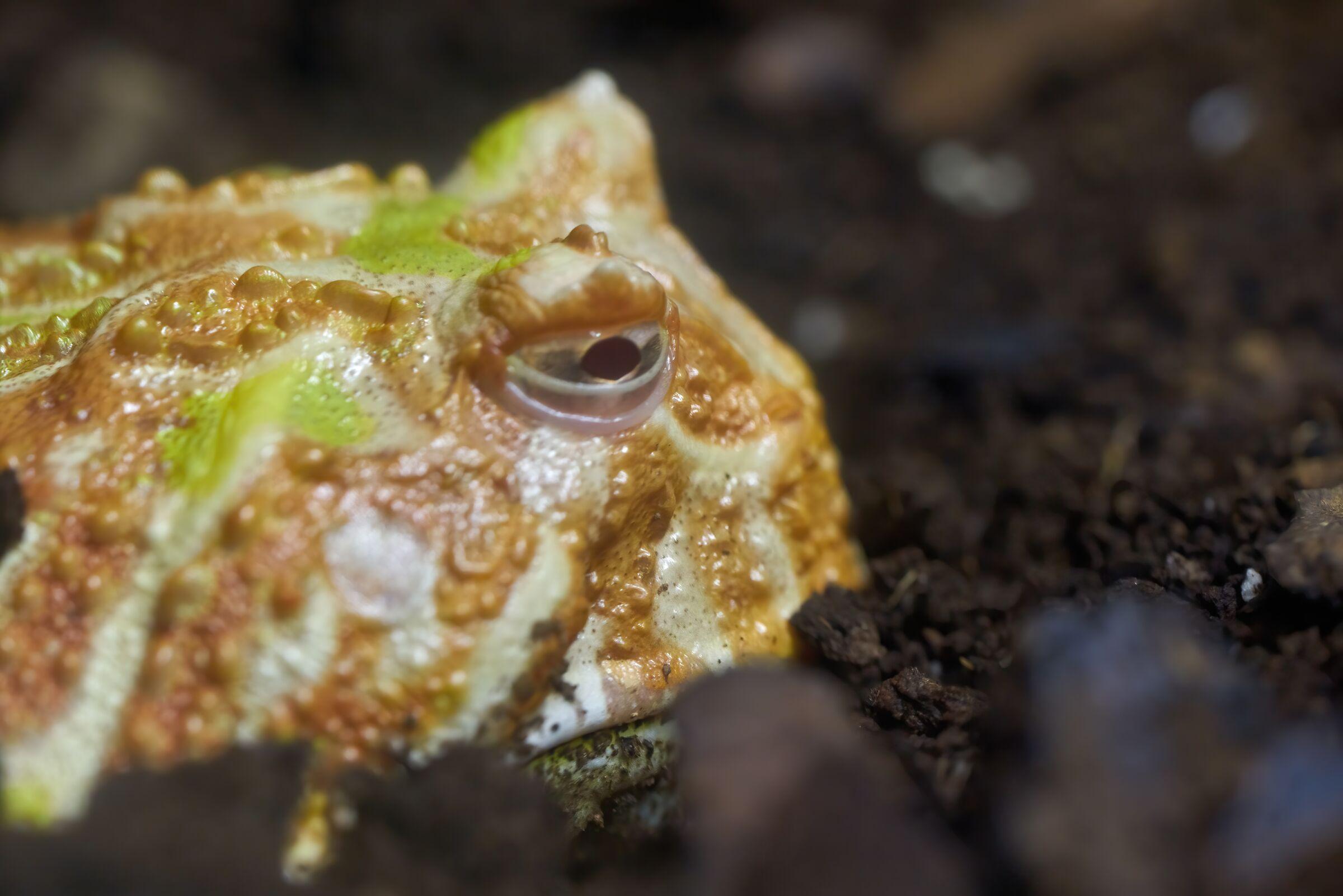 La tristezza del pesce pietra in cattività...