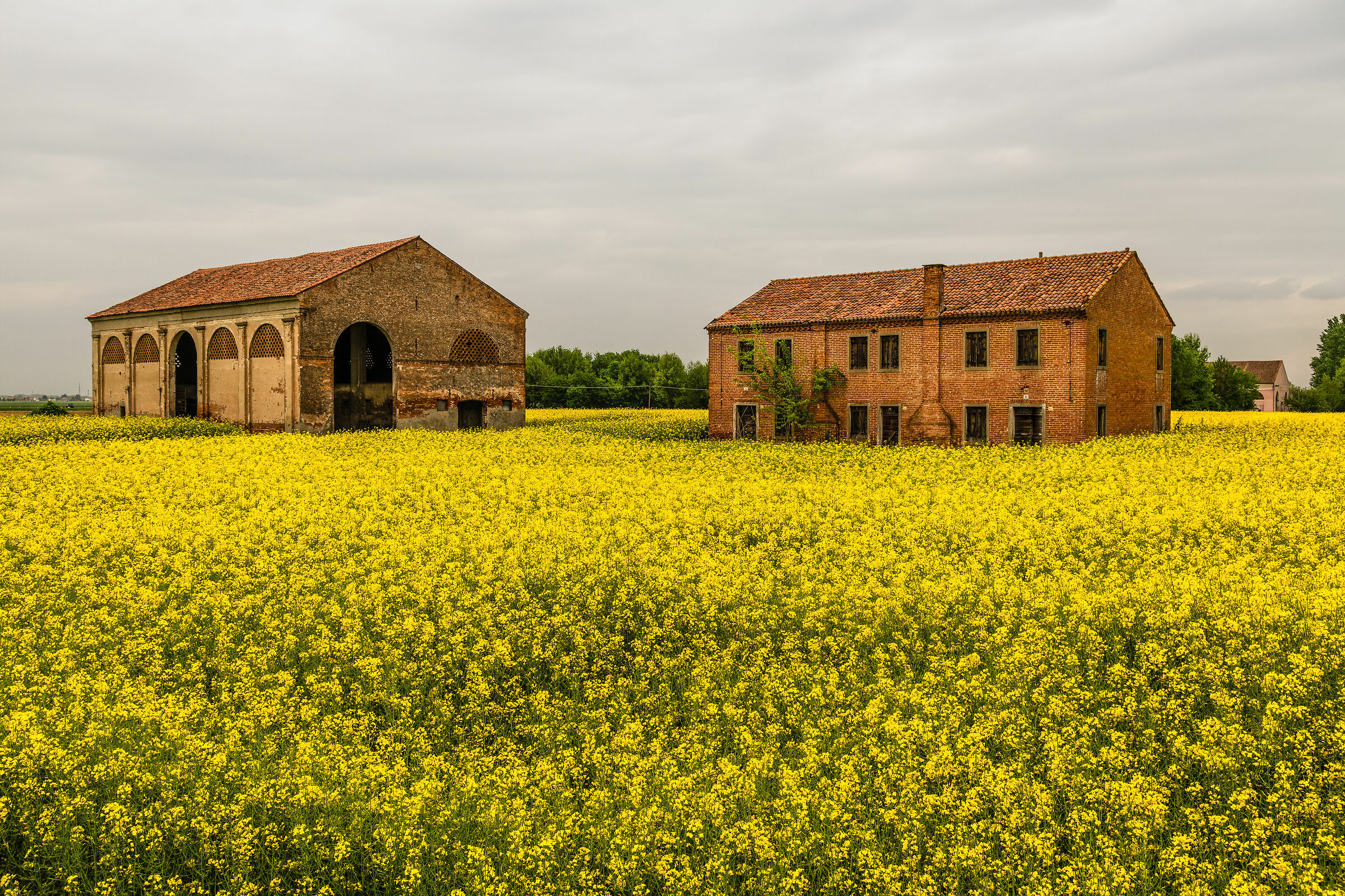 The Yellow Field 2...
