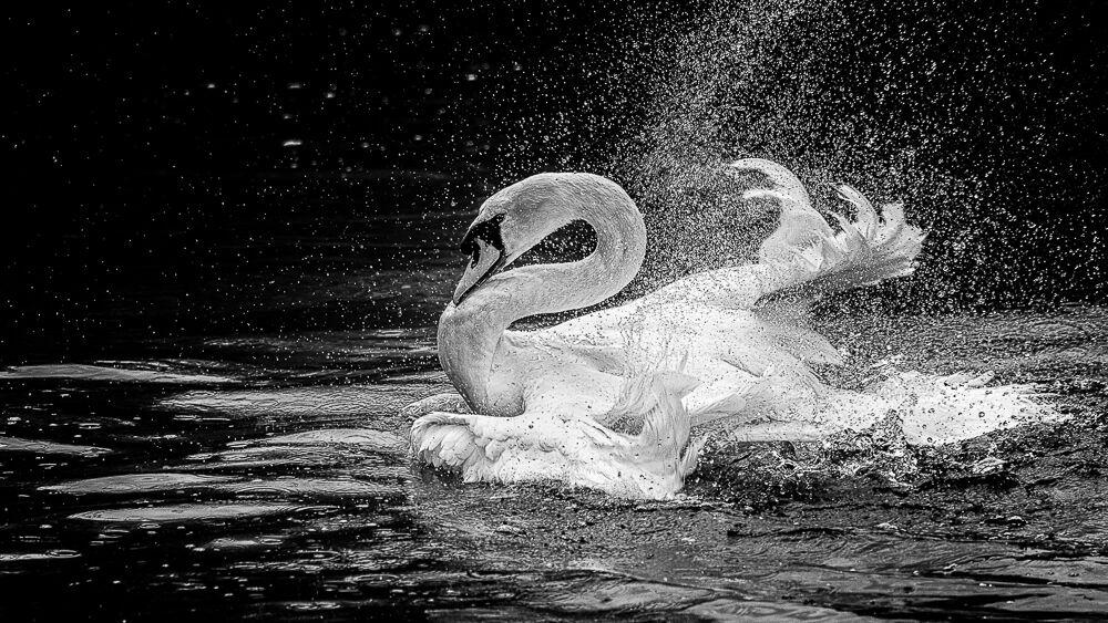 Bathtime...