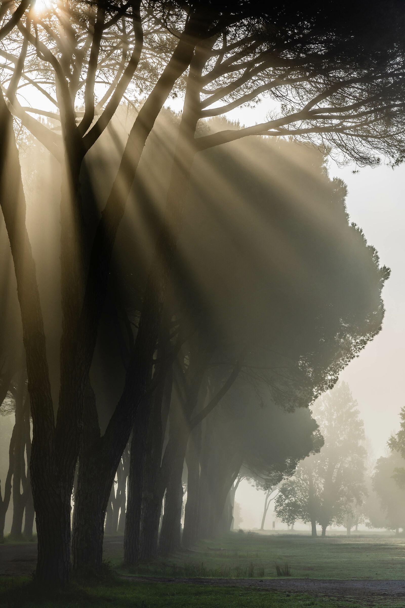 Spiragli of Light...
