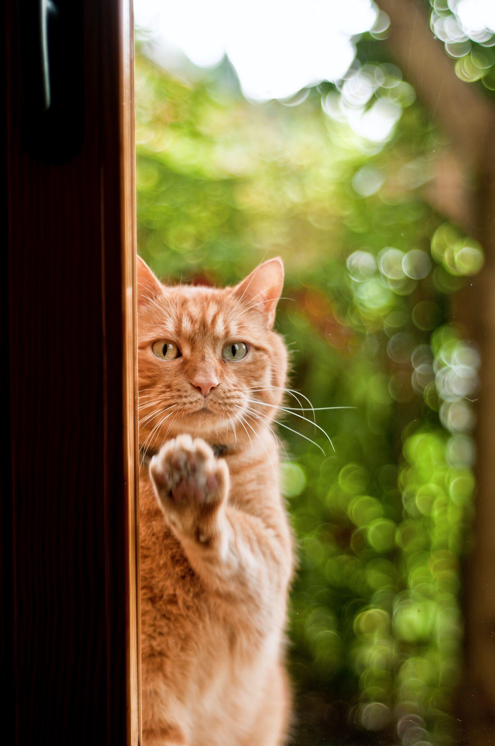 Hey Human, open the window!...