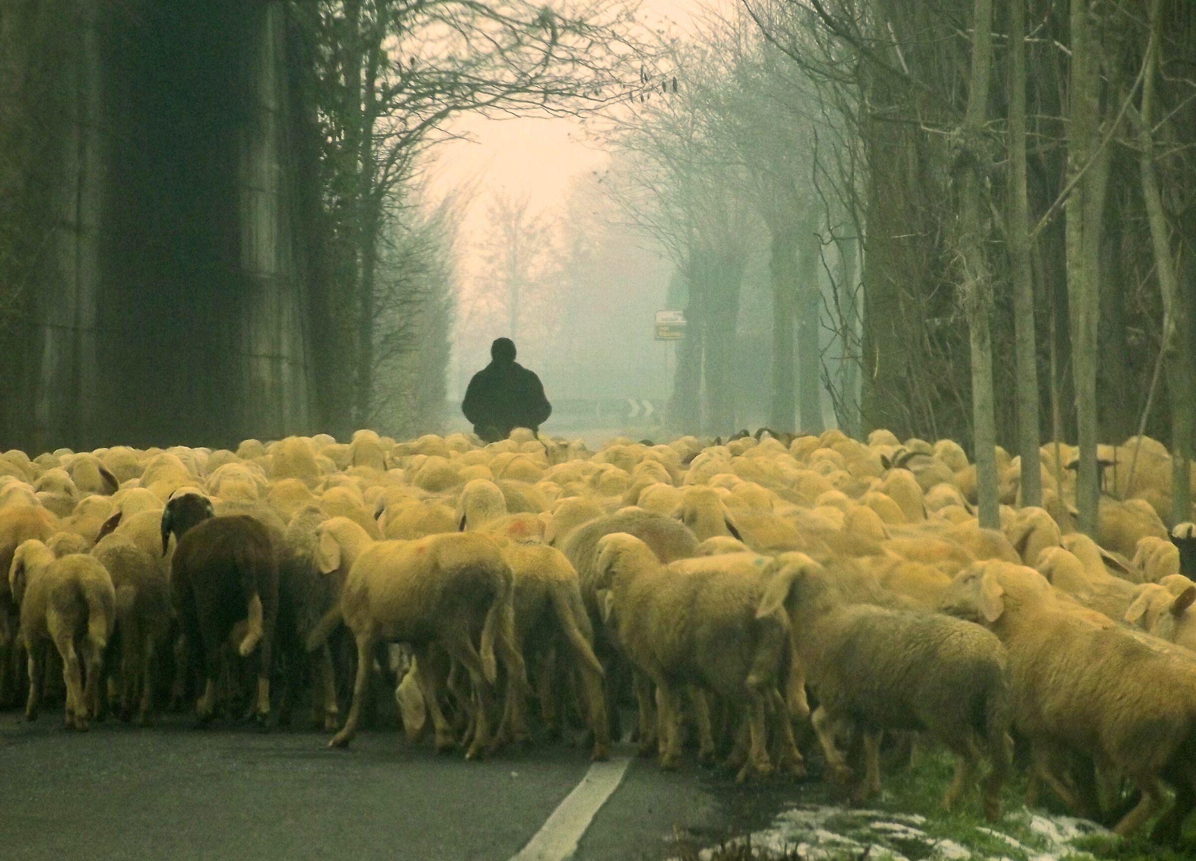 Flock in the Fog...