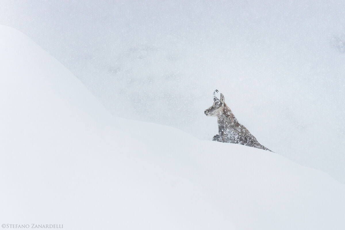 The Chamois and the storm...