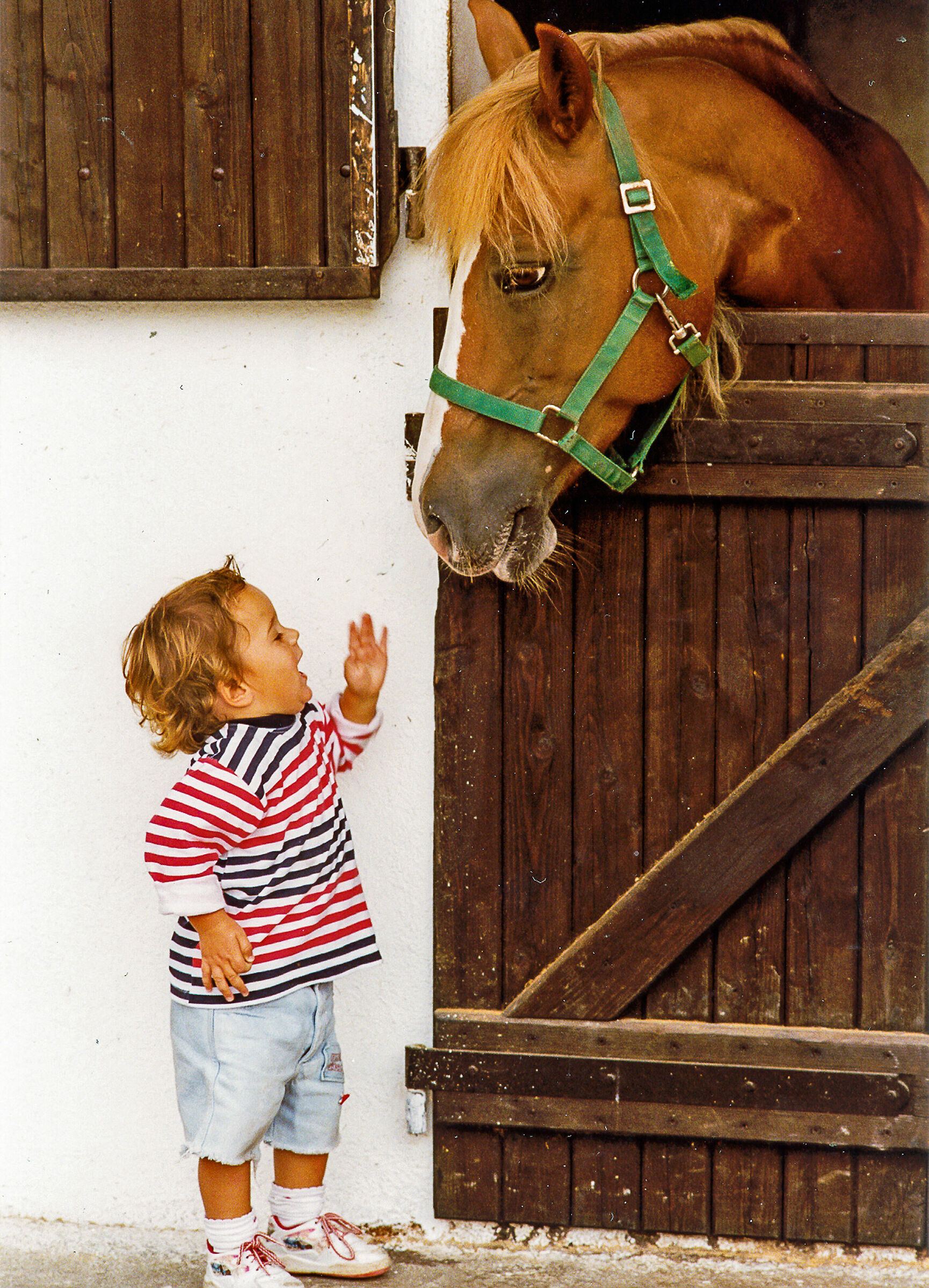 Alexander and the Horse...