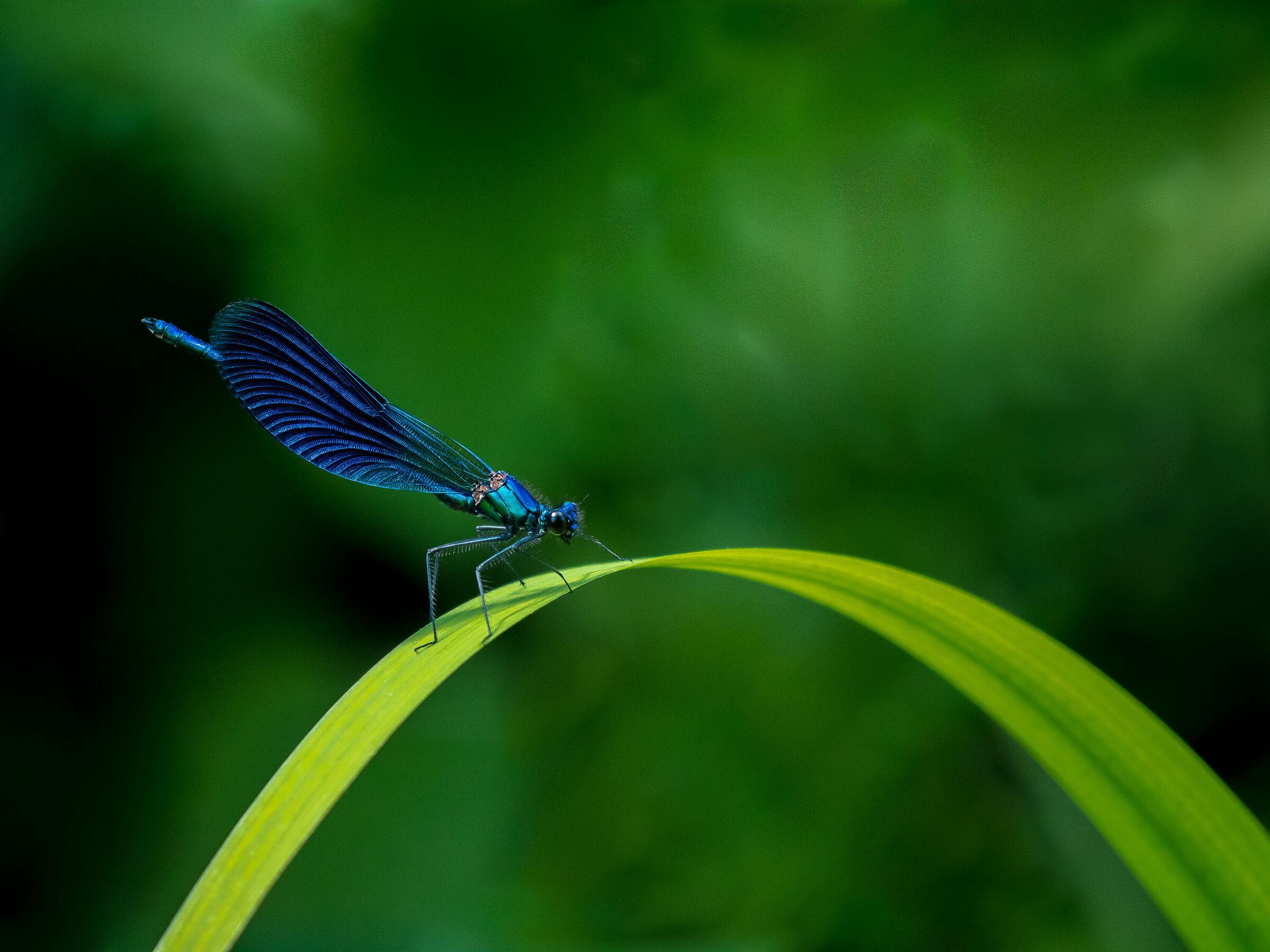 Deep Blue............