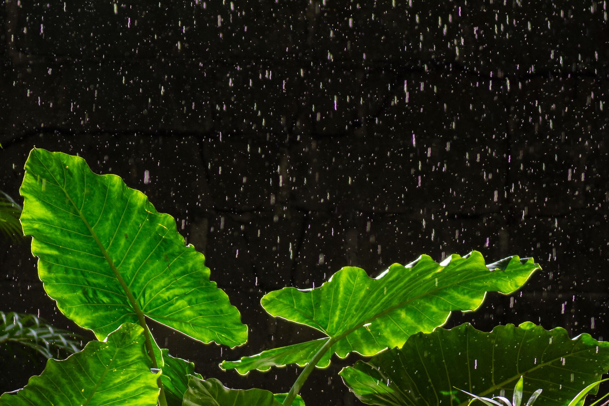 Sun and rain...