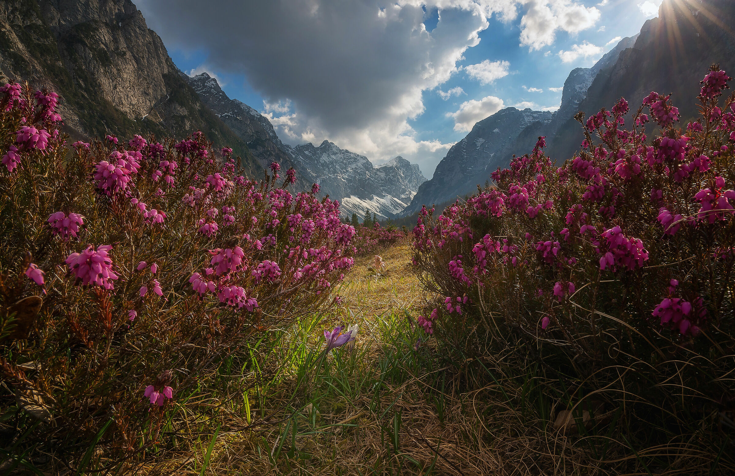 Mountain flowers...