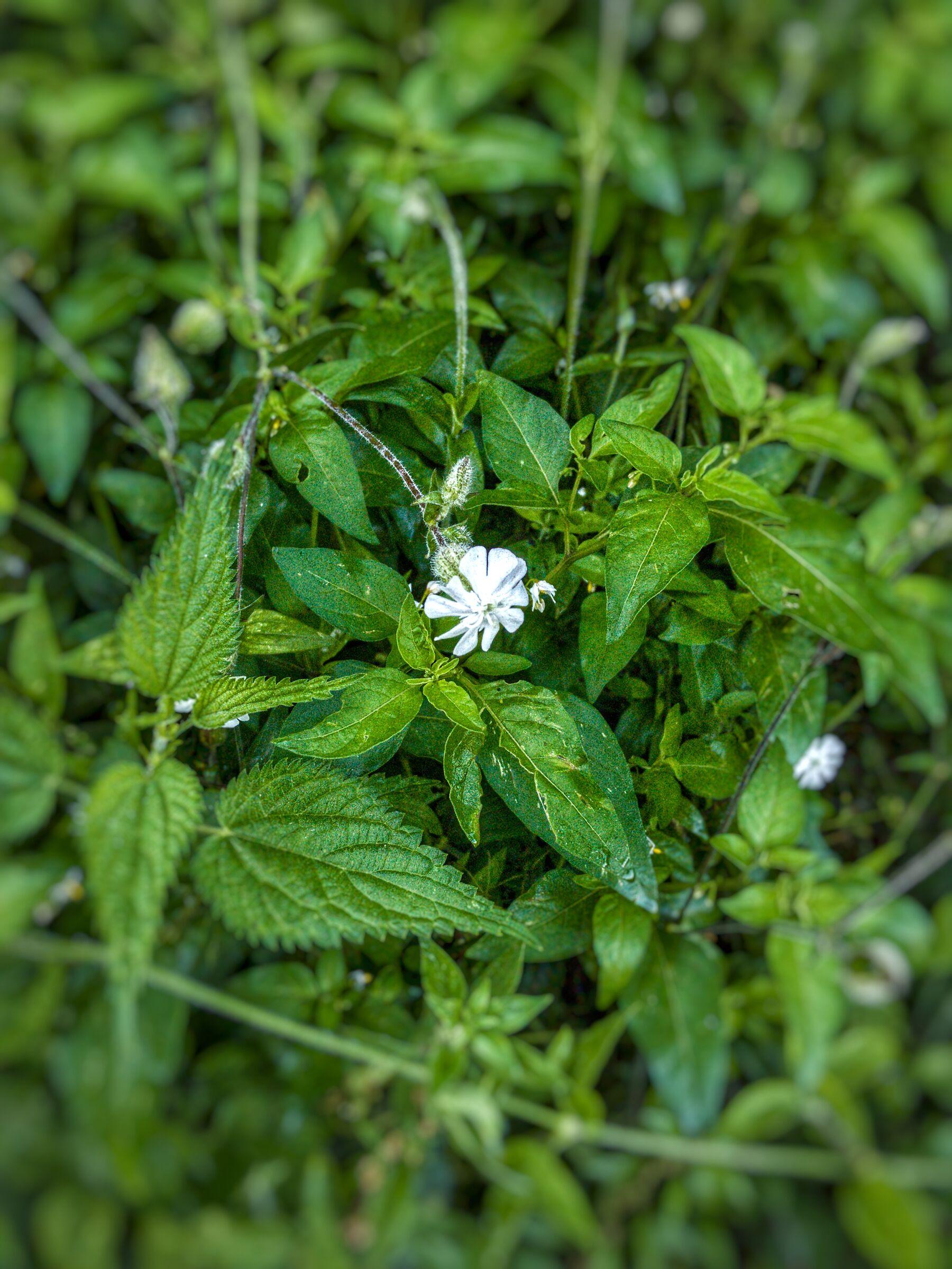 Fiore bianco...