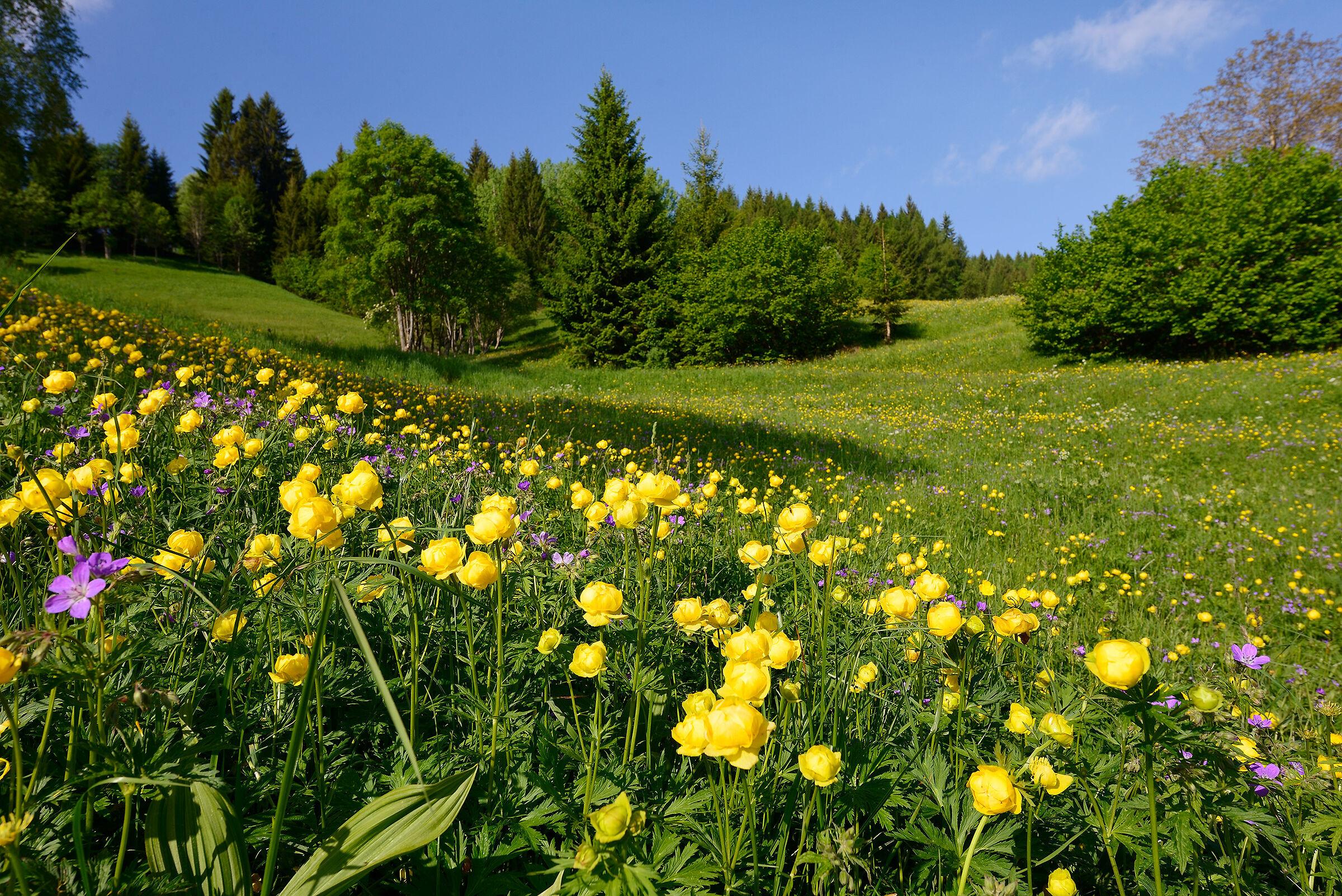 Meadows of Mount Tremalzo...