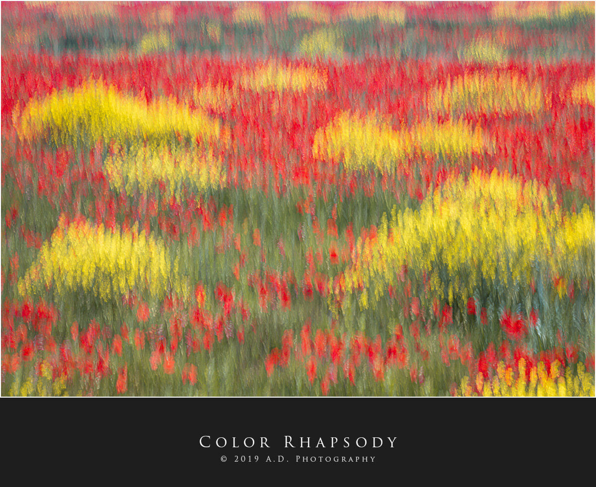 Color Rhapsody...