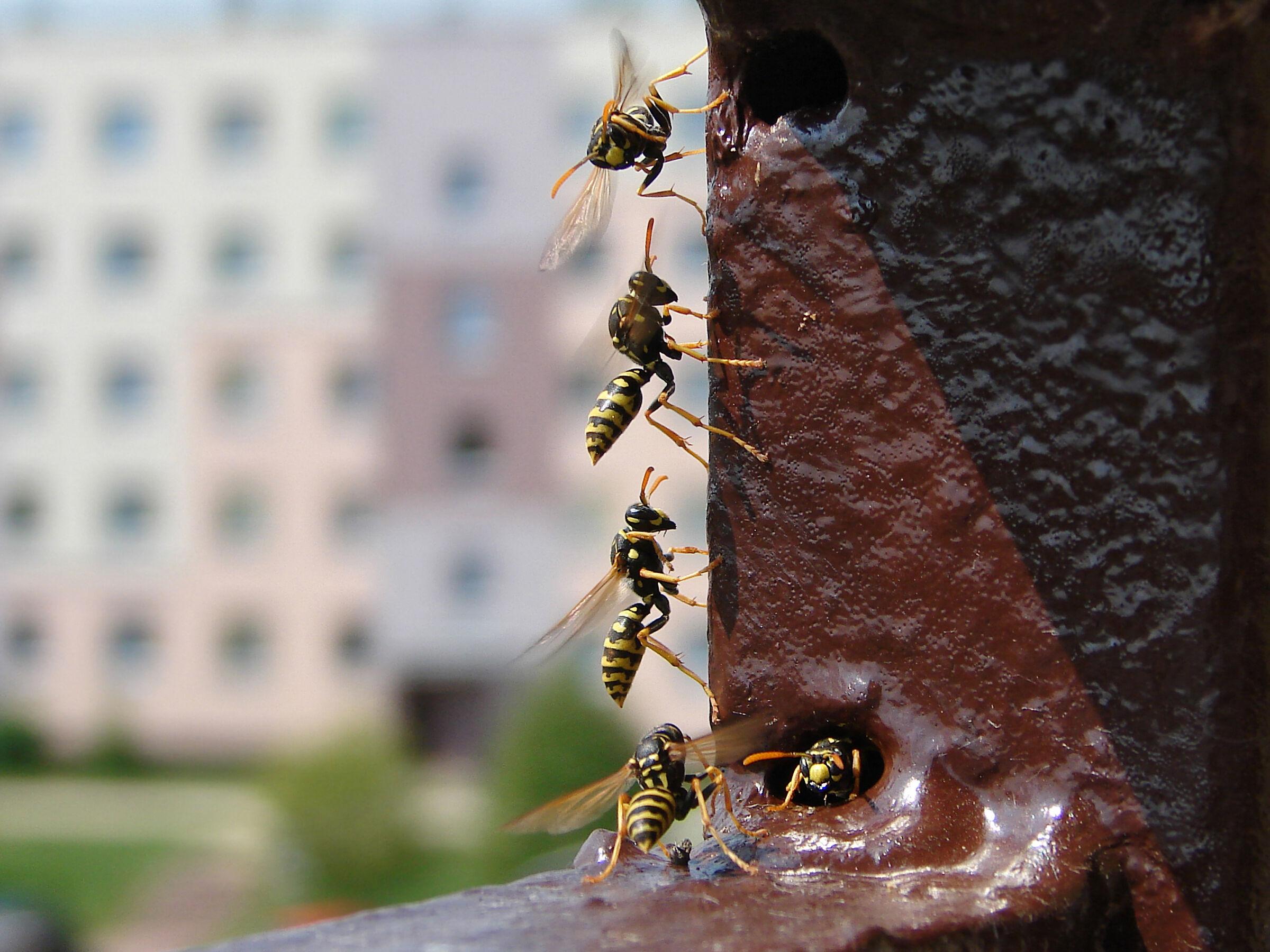 Wasp 1...
