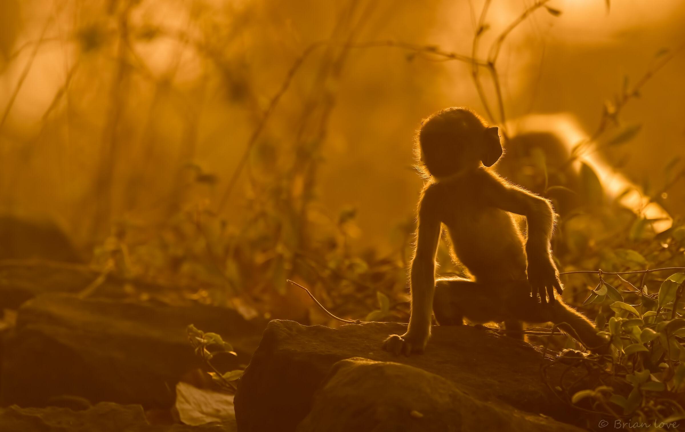 Gollum in Search of the Precious!...